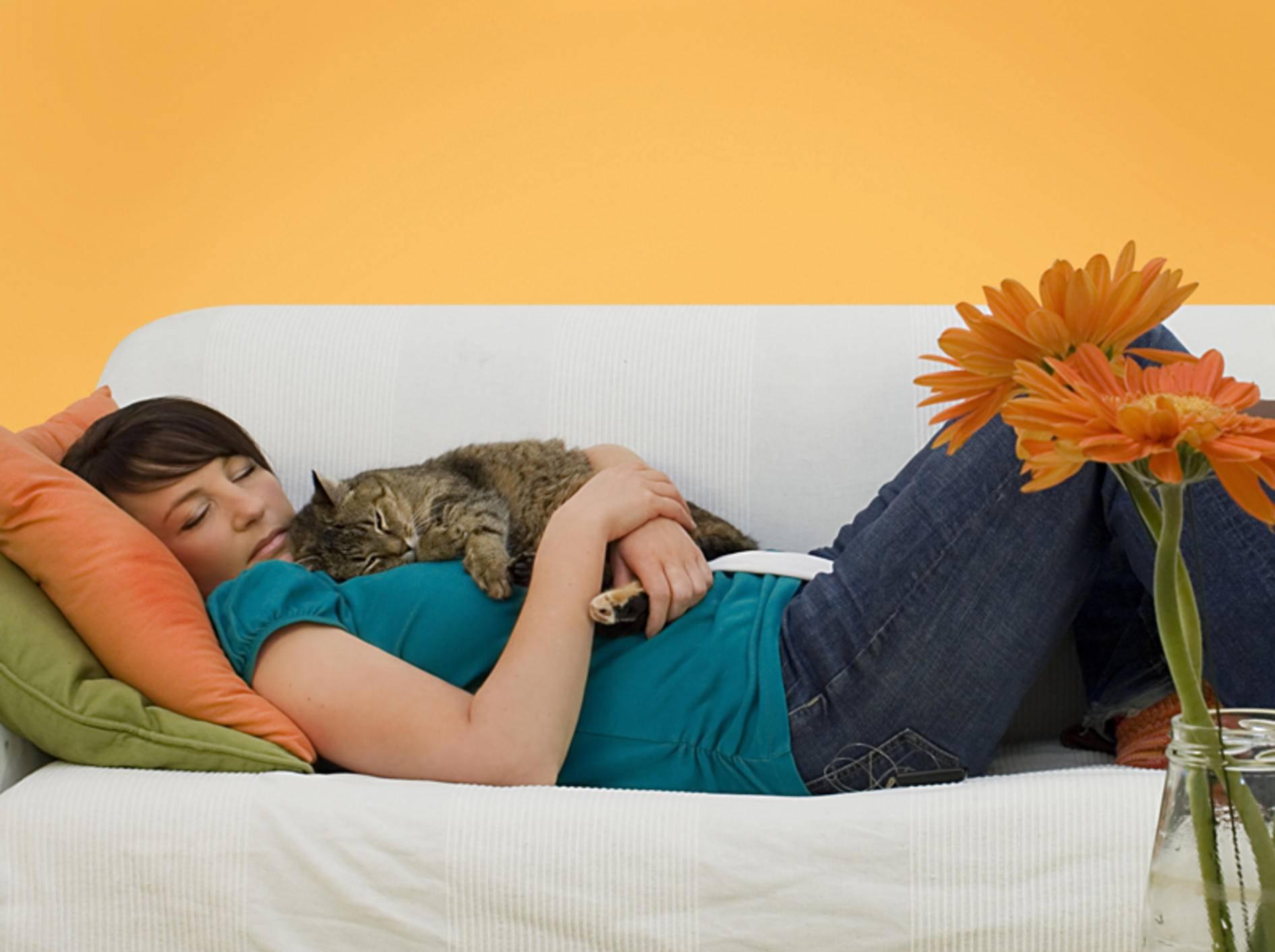 Glück ist: Eine Couch, eine Katze, ein gemeinsames Nickerchen – Shutterstock / Patrizia Tilly