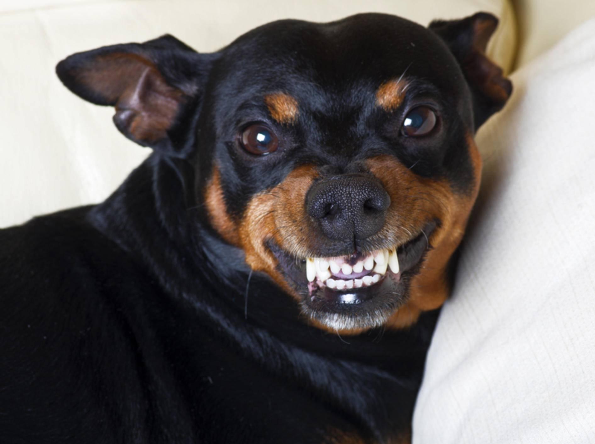 Wenn Ihr Hund auf einen Menschen so reagiert, stimmt oft etwas nicht – Shutterstock / O.Bellini