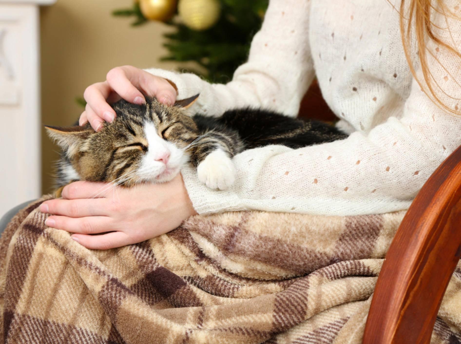 So eine mollig-warme Kuschelstunde mit Katze ist im Winter das Schönste – Shutterstock / Africa Studio