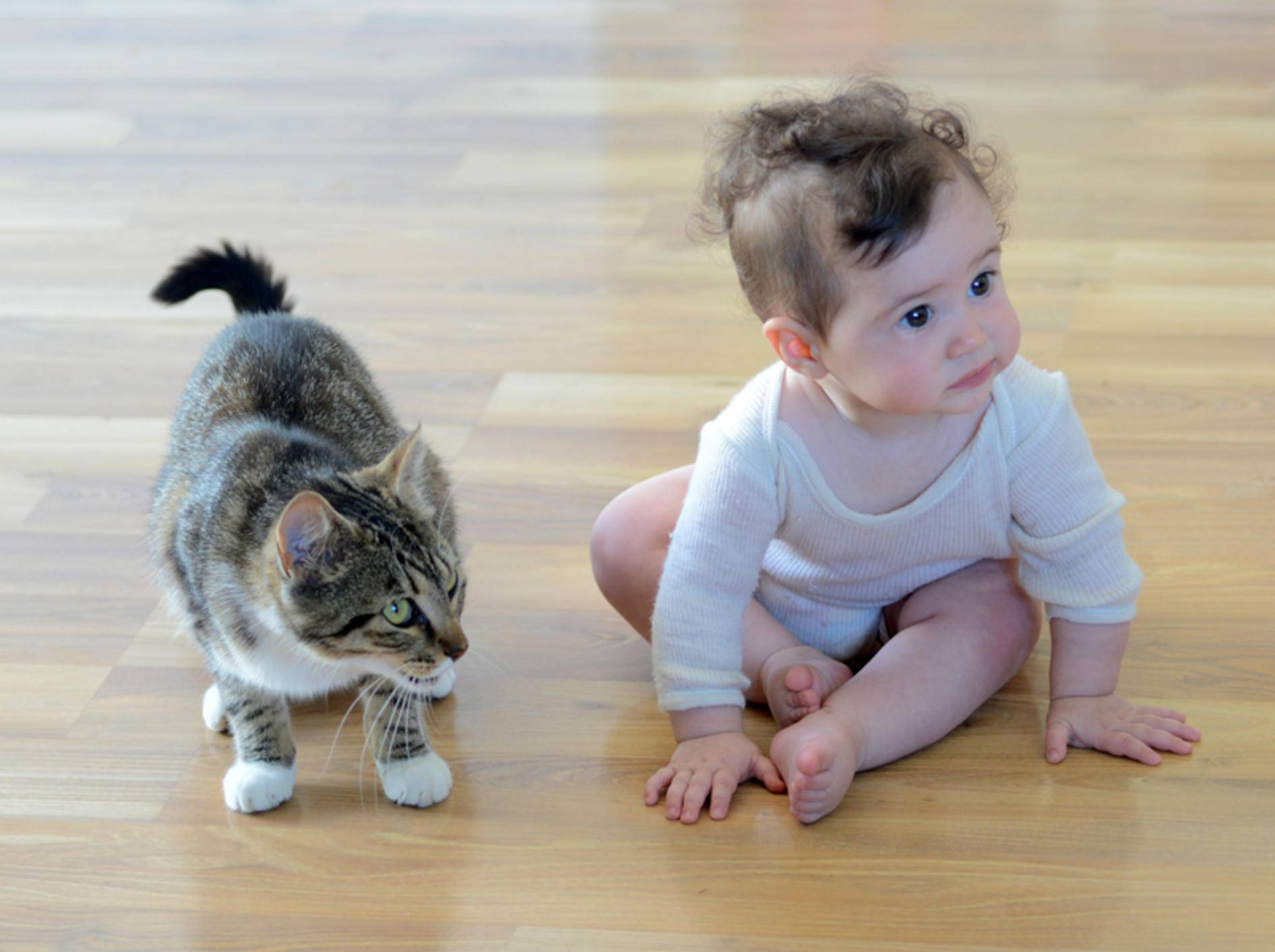 Katze und Baby können gut miteinander auskommen – Shutterstock / ChameleonsEye