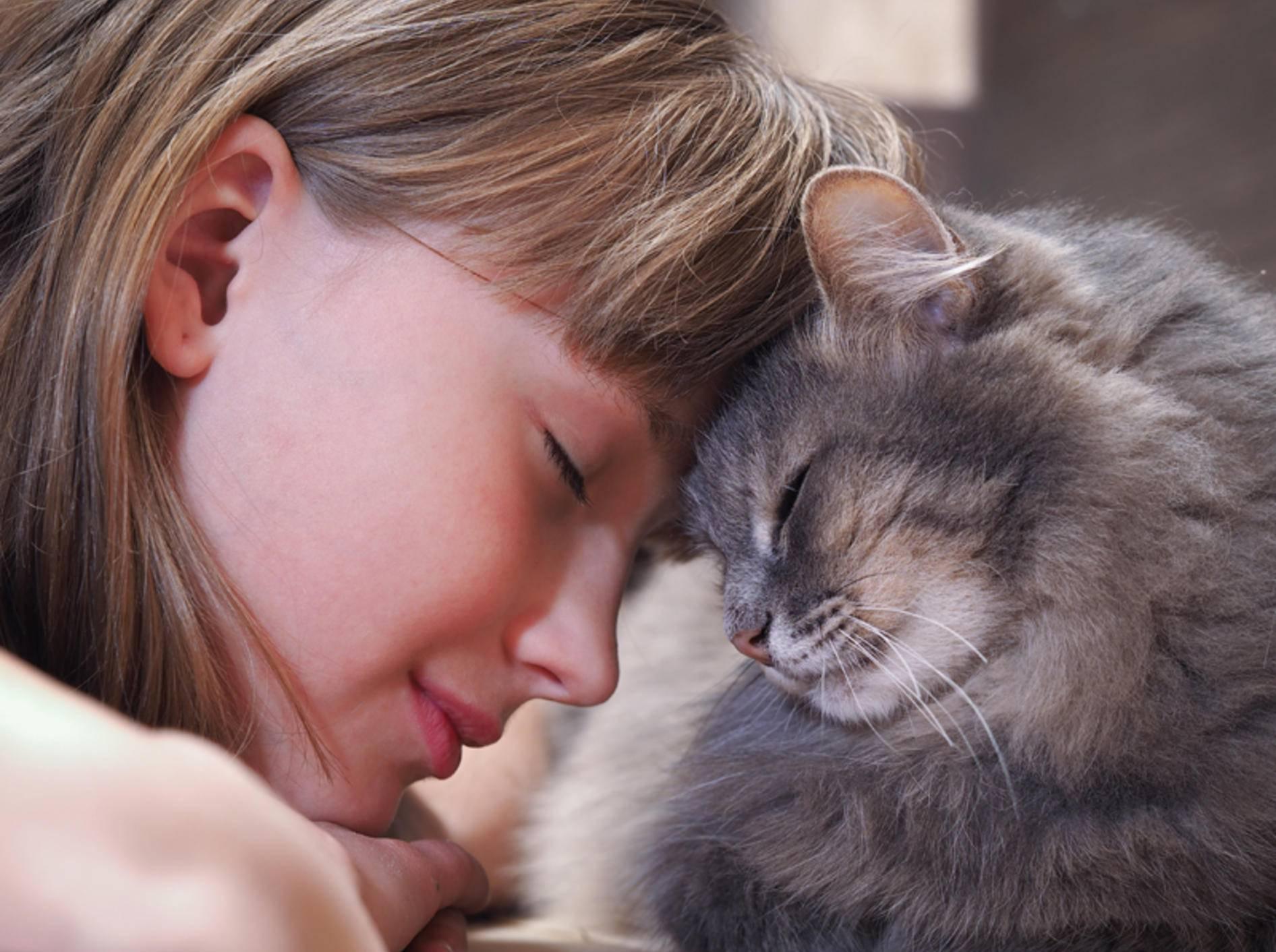 Eine Katze mit ihrer geliebten Menschenfreundin – Shutterstock / Irina Kozorog