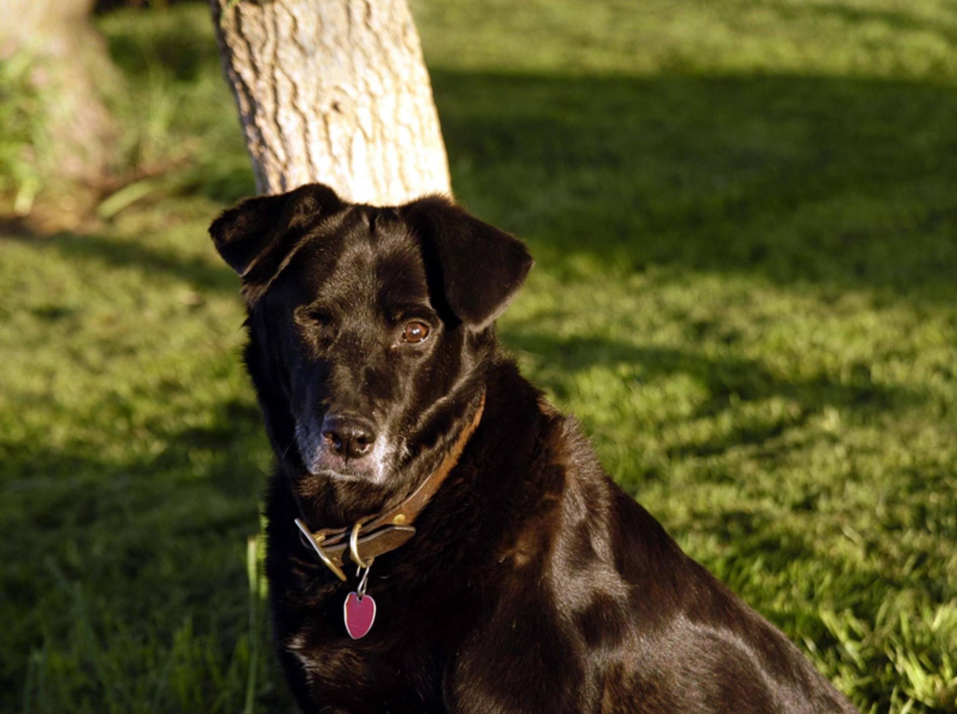 Wenn Ihr Hund nicht mehr gut sieht, braucht er Ihre Hilfe – Shutterstock / Dale A Stork