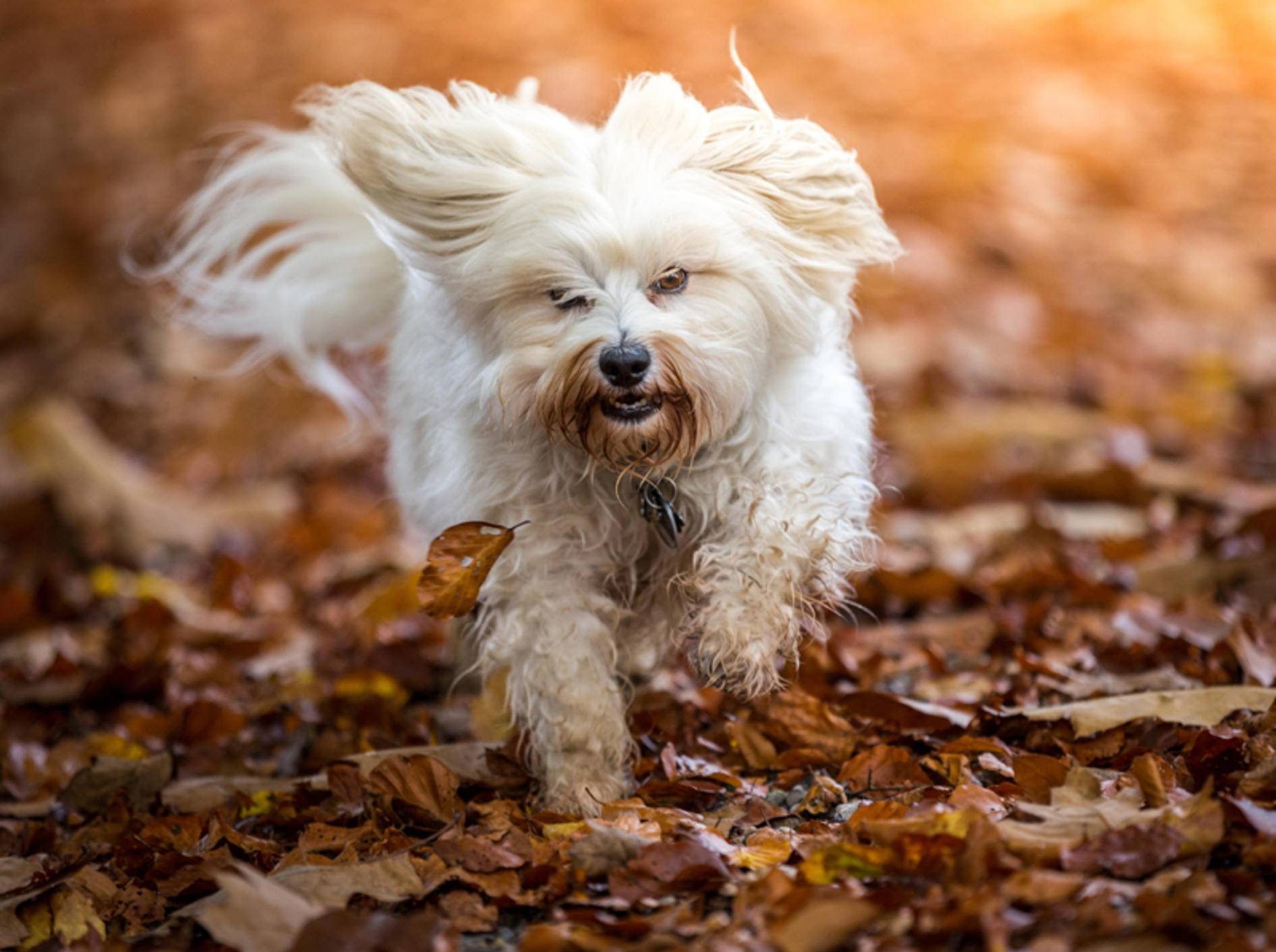 Auch ohne Kastanien macht der Herbstspaziergang Spaß – Shutterstock / Bildagentur Zoonar GmbH