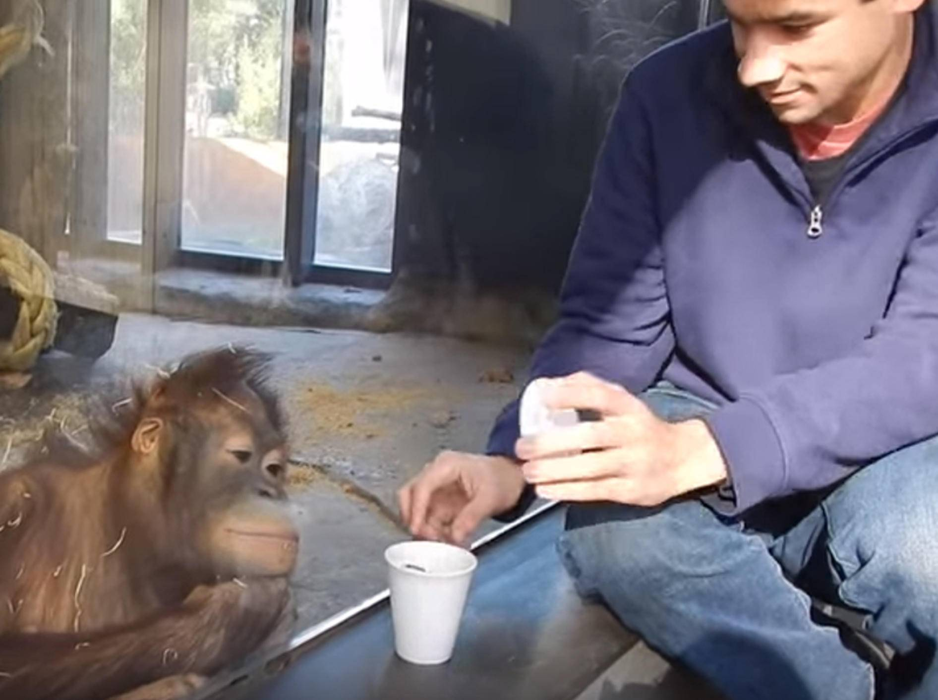 """Hihihihi!"" Affe lacht über Zaubertrick – Bild: YouTube / Dan Zaleski"