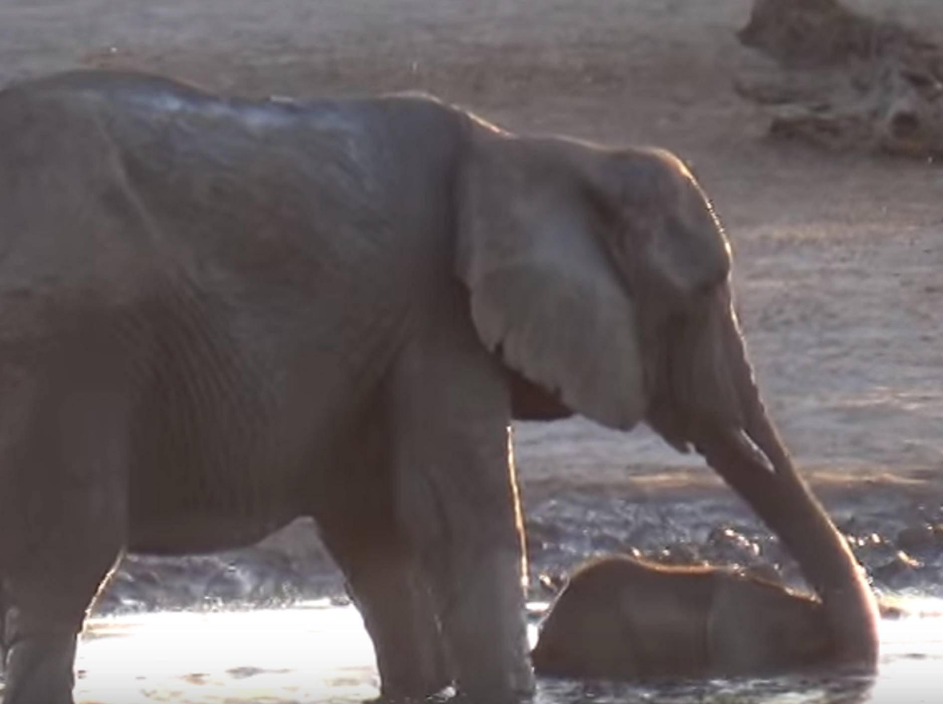 """Baby-Elefant: """"Och Mama, lass mich noch weiterplanschen!"""" – Bild: YouTube / The Hide Safari Camp"""