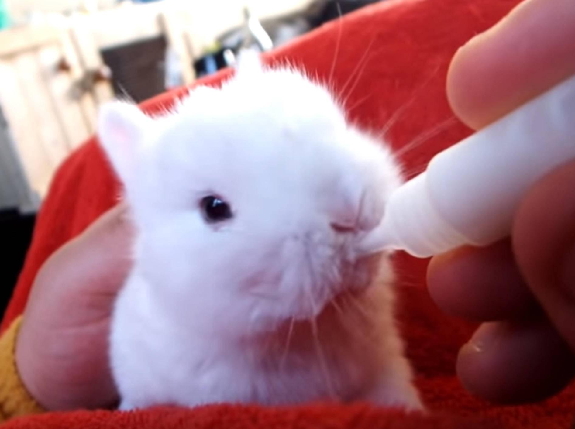 Futter fassen! Hasenbaby trinkt genüsslich aus Fläschchen – Bild: YouTube / NatBywaters23