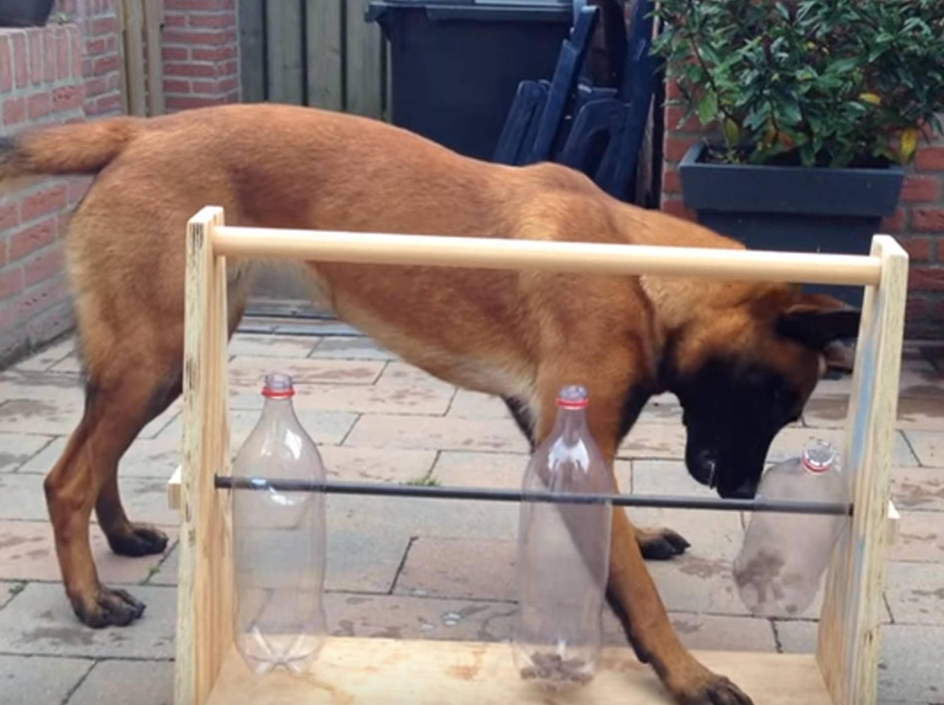 Malinois Bella spielt pfiffiges Flaschenspiel – Bild: YouTube / Eveline Poot