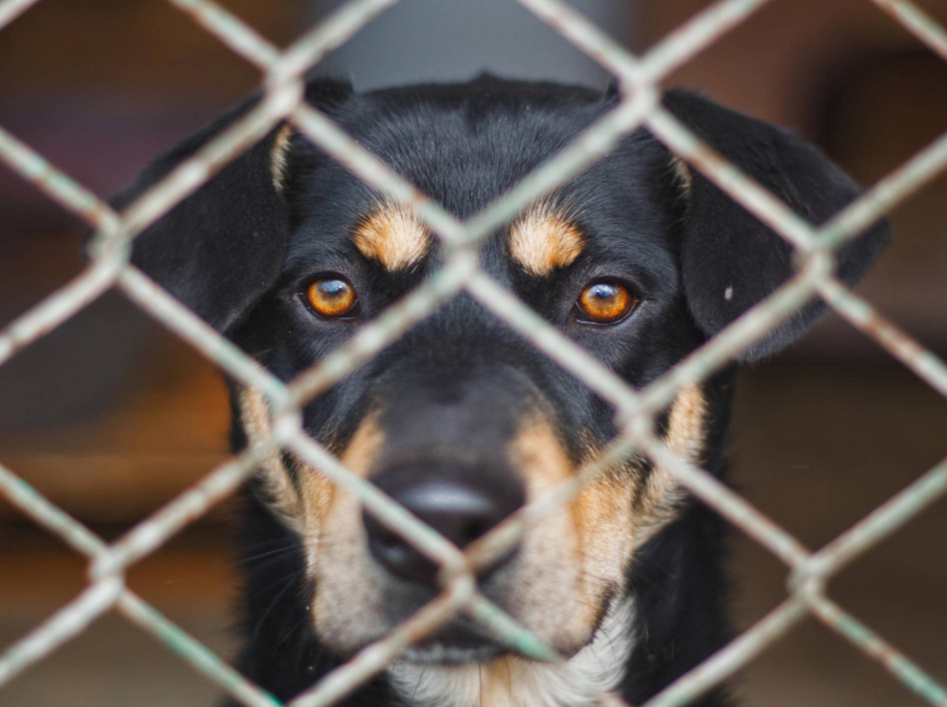 Jeder Hund aus dem Tierheim freut sich über ein neues, liebevolles Zuhause – Shutterstock / Pawel Uchorczak