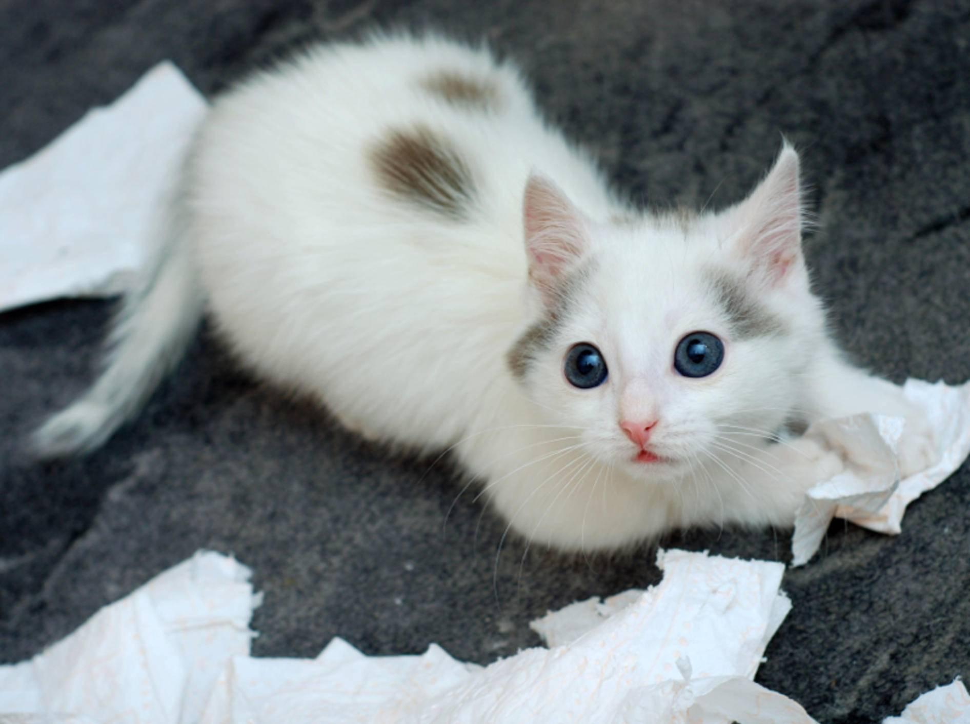 Katzen spielen gerne mit Dingen, die nicht als Spielzeug gedacht sind – Shutterstock / Nadinelle