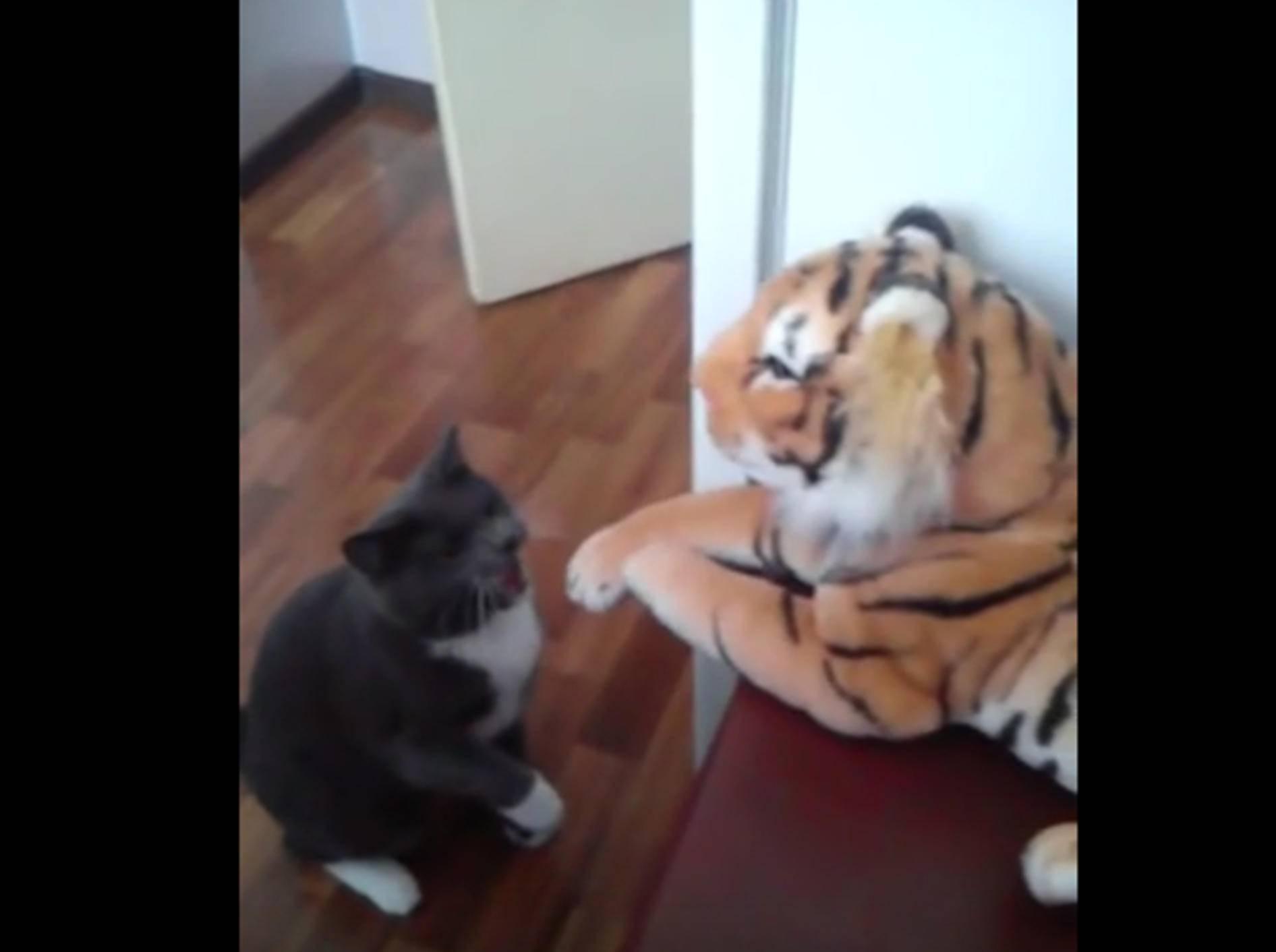 """""""Ich mag dich nicht!"""" Katze vermöbelt Stofftiger – Bild: YouTube / Mr. Maci"""