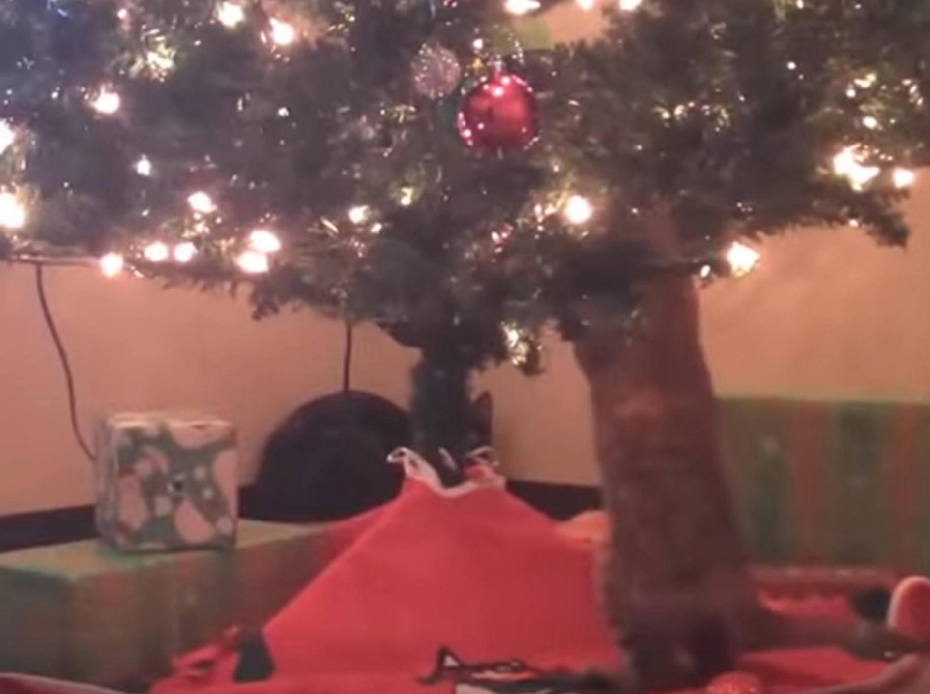 Oh, ein Weihnachtsbaum... krach! Katzen toben sich aus – Bild: YouTube / The Dodo