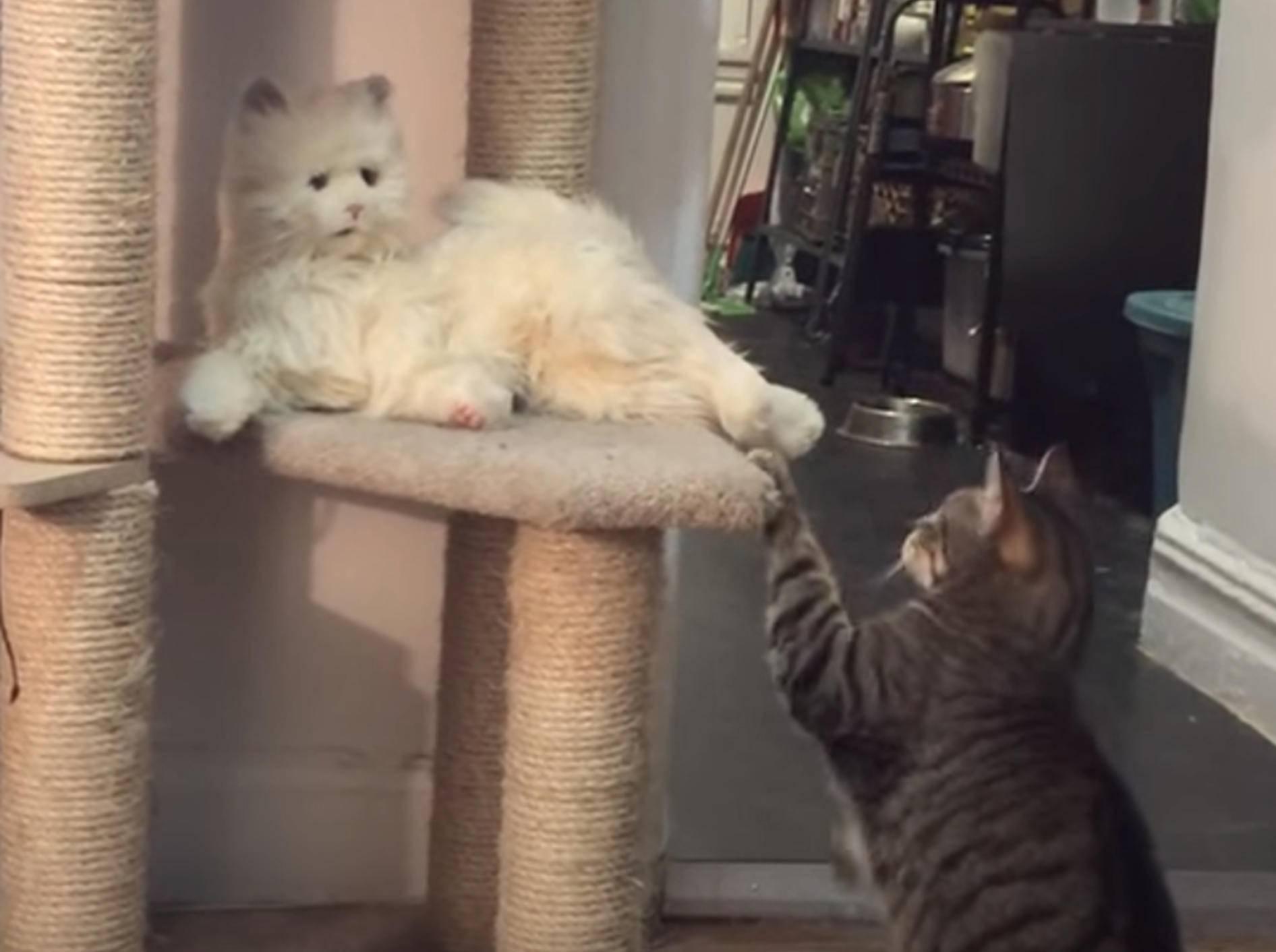 Machen Katzenroboter bald echten Miezen Konkurrenz? – Bild: YouTube / The Dodo