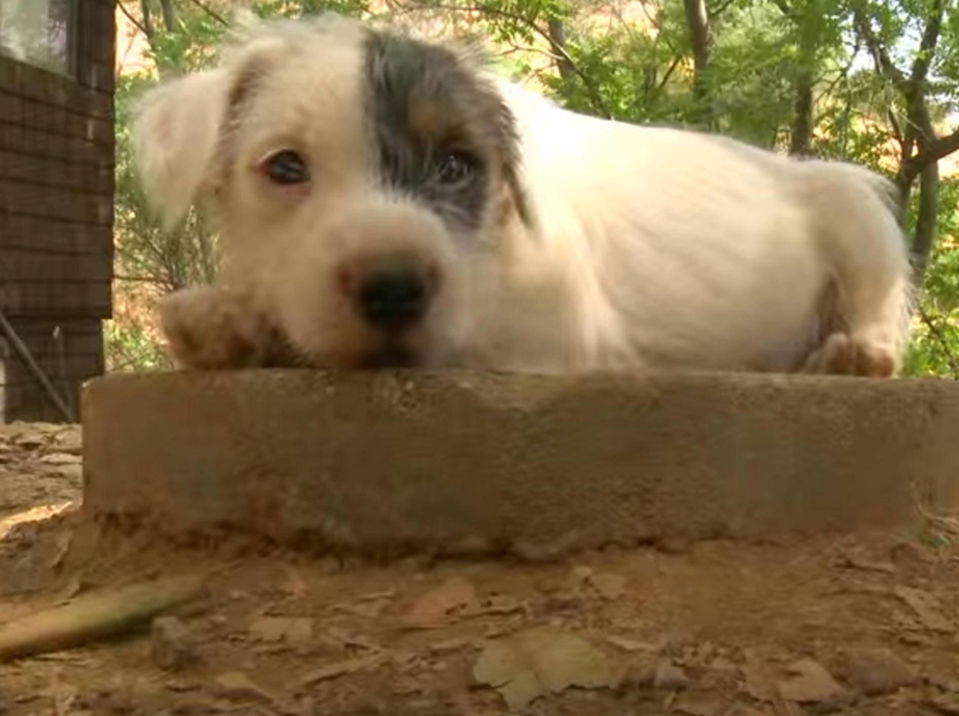 Total vergnügt: Parson Russell Terrier toben im Garten – Bild: YouTube / The Pet Collective