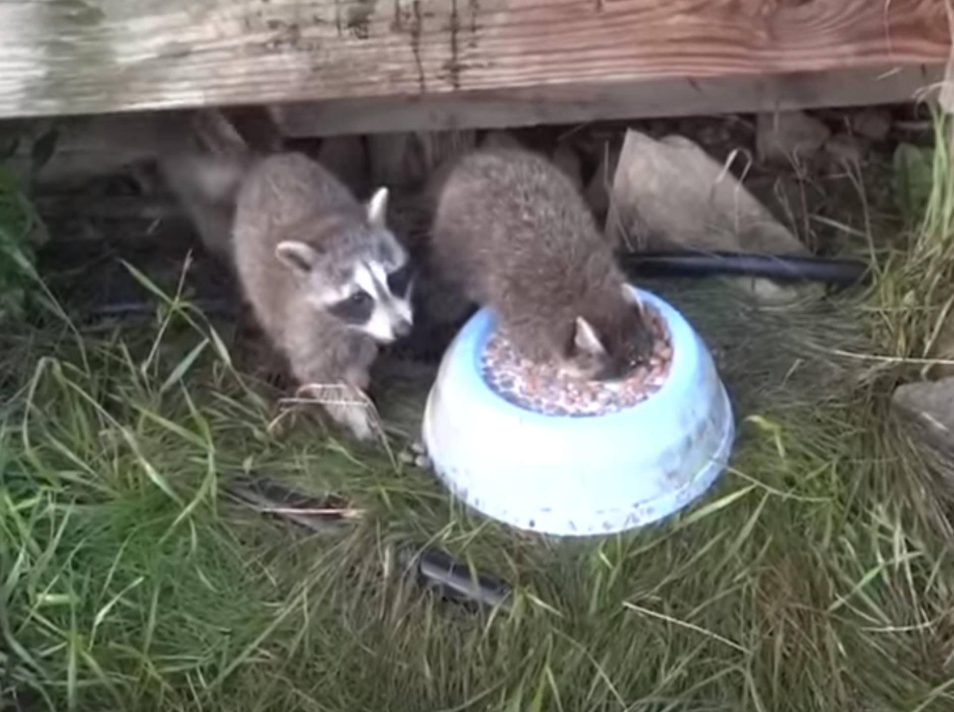 Diese Tiere haben groooßen Appetit – Bild: YouTube / The Pet Collective