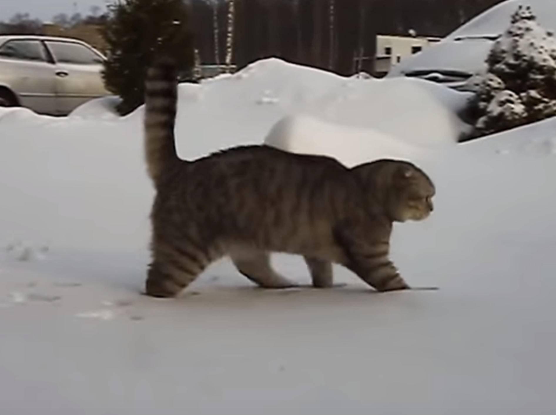 So lustig: Diese Tiere sehen Schnee zum ersten Mal – Bild: YouTube / The Dodo