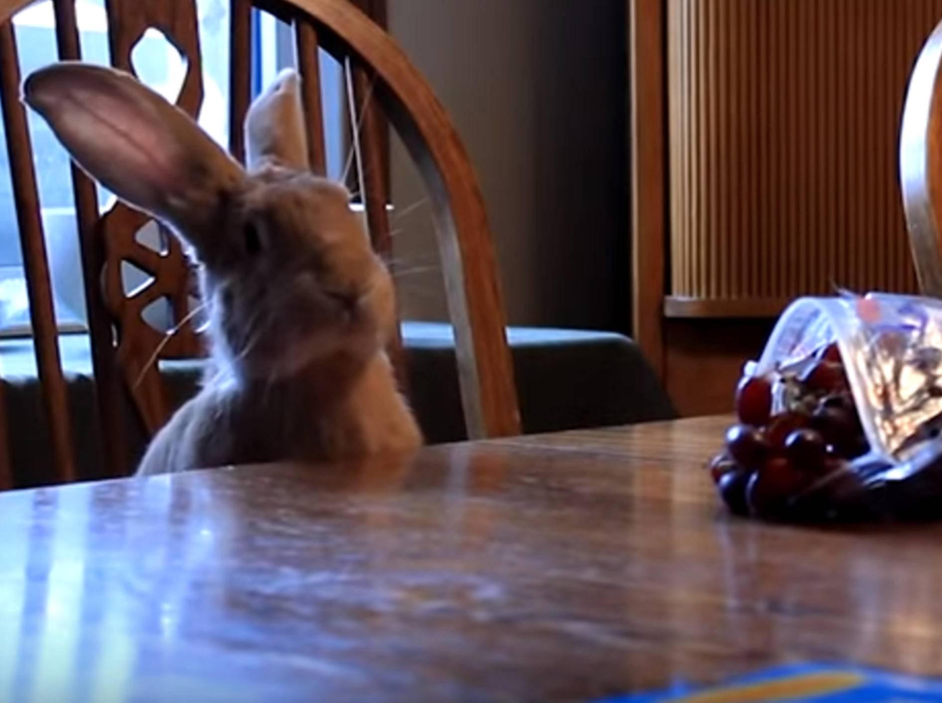 Wenn Tiere leckeres Essen auf dem Tisch erblicken – Bild: YouTube / The Dodo