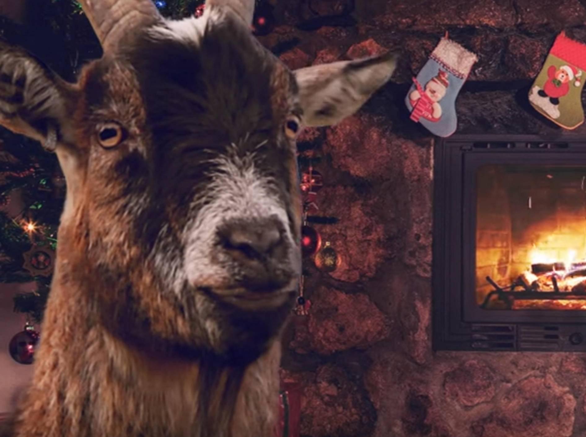 Määäähryyyy Christmas! Ziegen blöken Weihnachtsklassiker – Bild: YouTube / ActionAidSweden