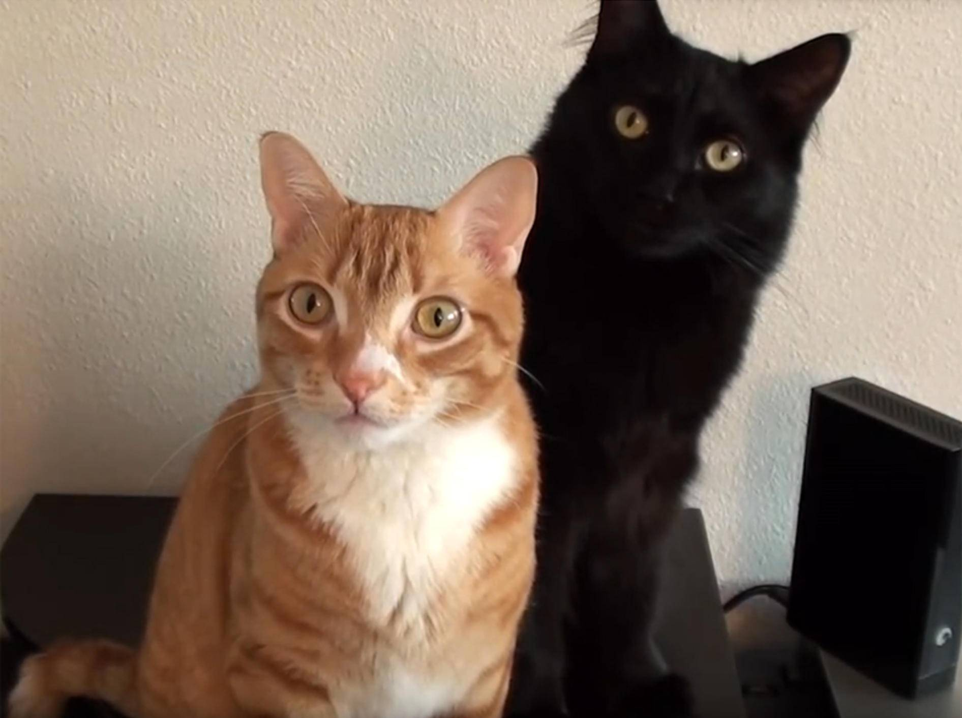 Cole und Marmalade lauschen andächtig der Katzenmusik aus dem Lautsprecher – YouTube / Cole and Marmalade