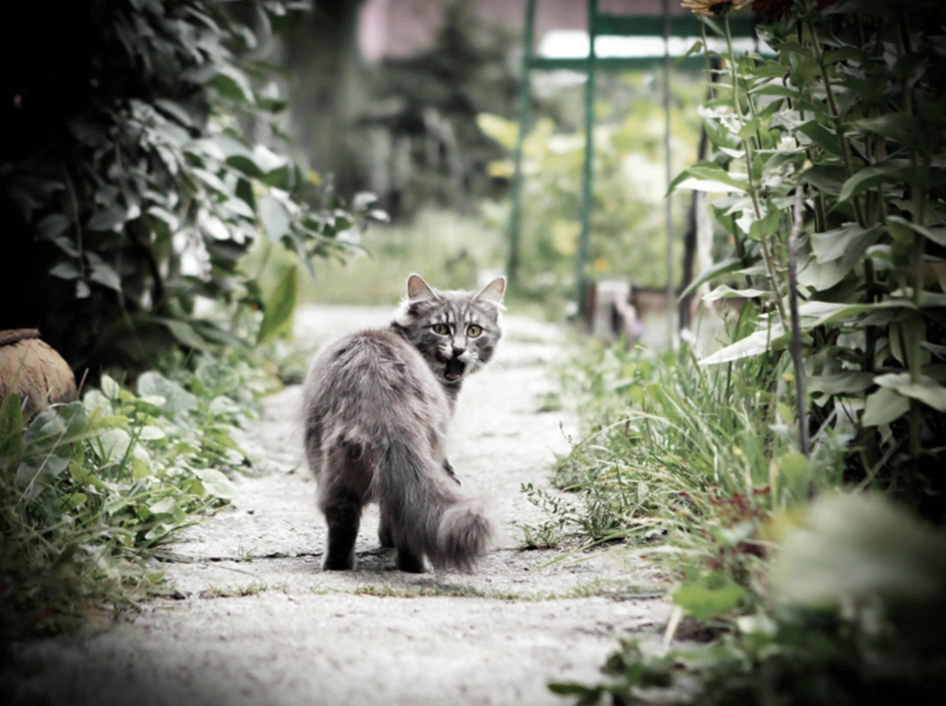 Am Hinterteil Ihrer Katze können Sie sehen, ob sie gesund ist – Shutterstock / Sabphoto