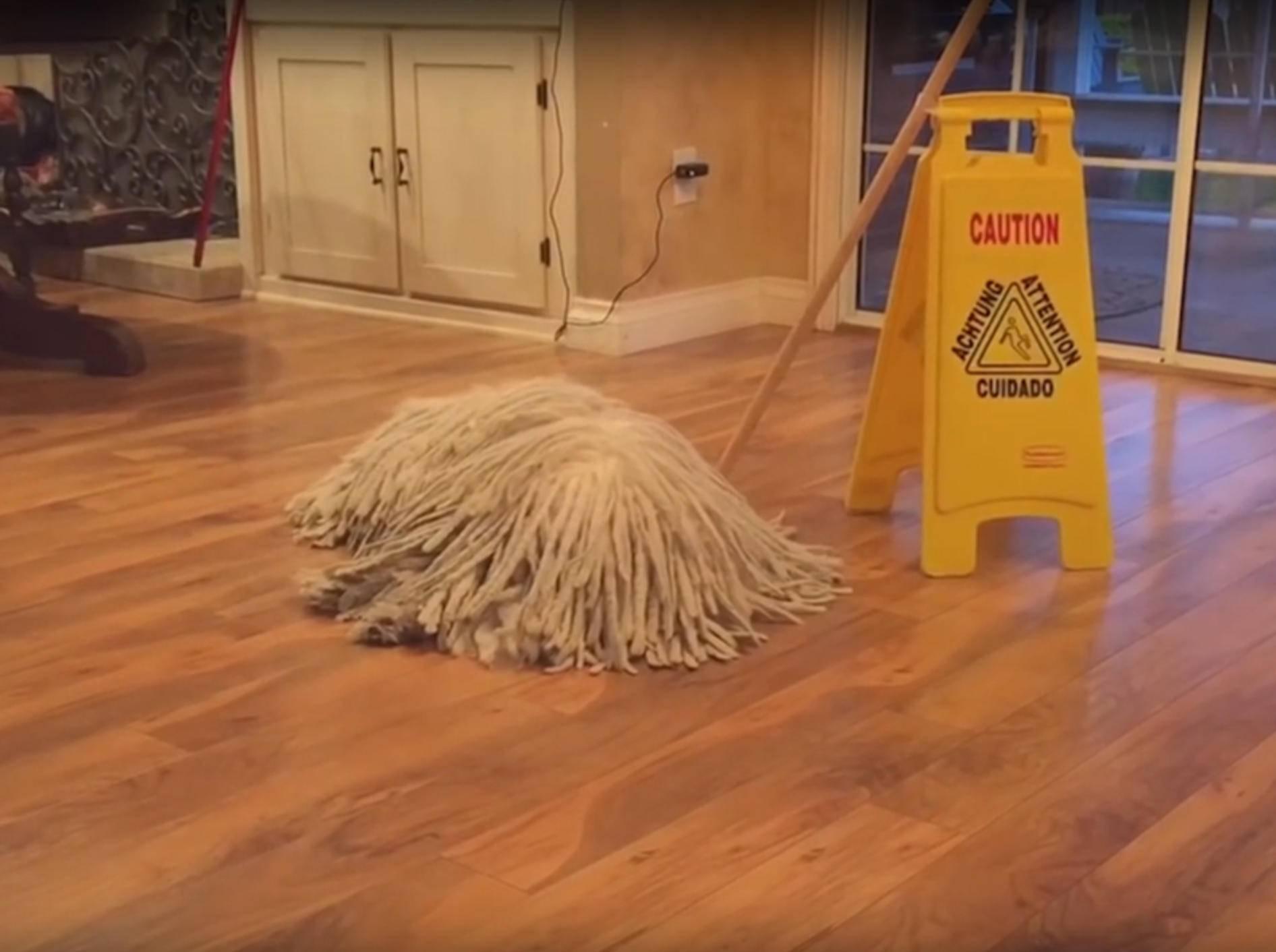 Ist es ein Mop? Oder ein Hund? – YouTube / Kyoot Animals
