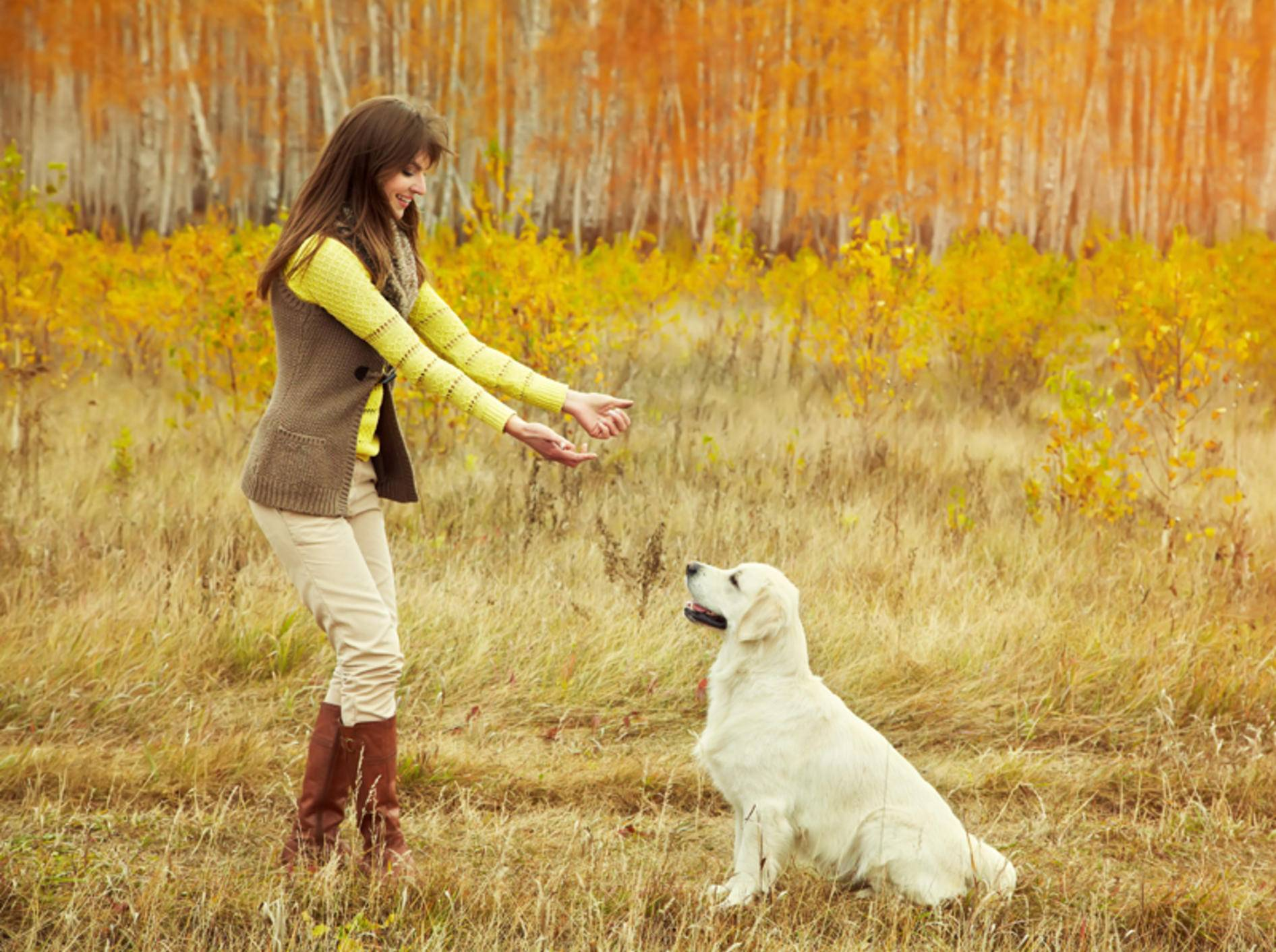 Das Freilauftraining mit dem Hund ist eine Frage des Vertrauens – Shutterstock / Evgeny Bakharev