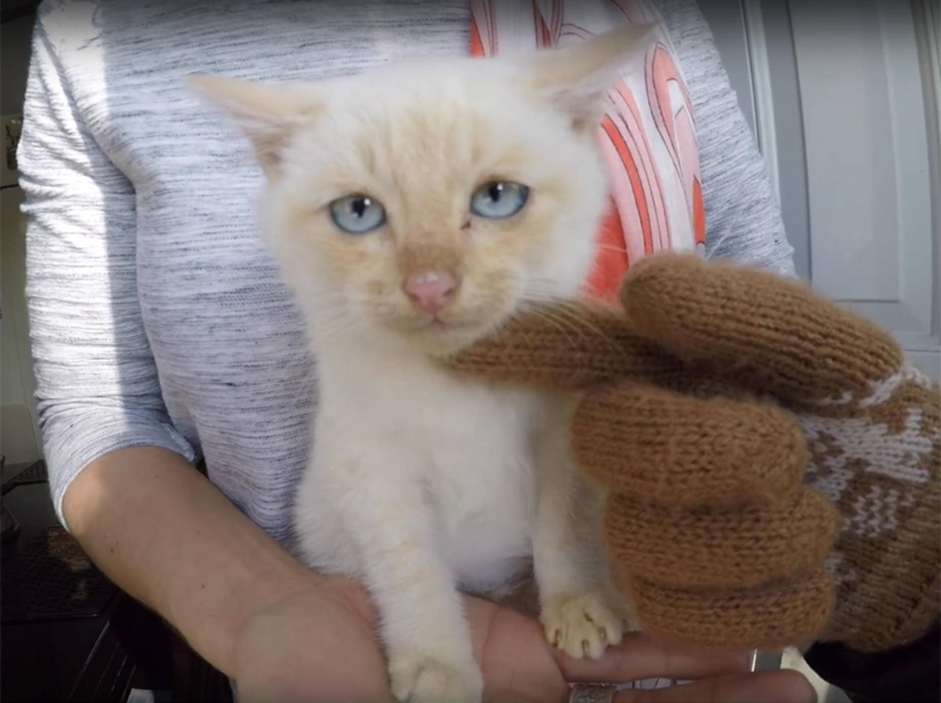 Kätzchen Lazarus wurde vorm Erfrieren gerettet und erholt sich im neuen Zuhause – YouTube / Branden Bingham