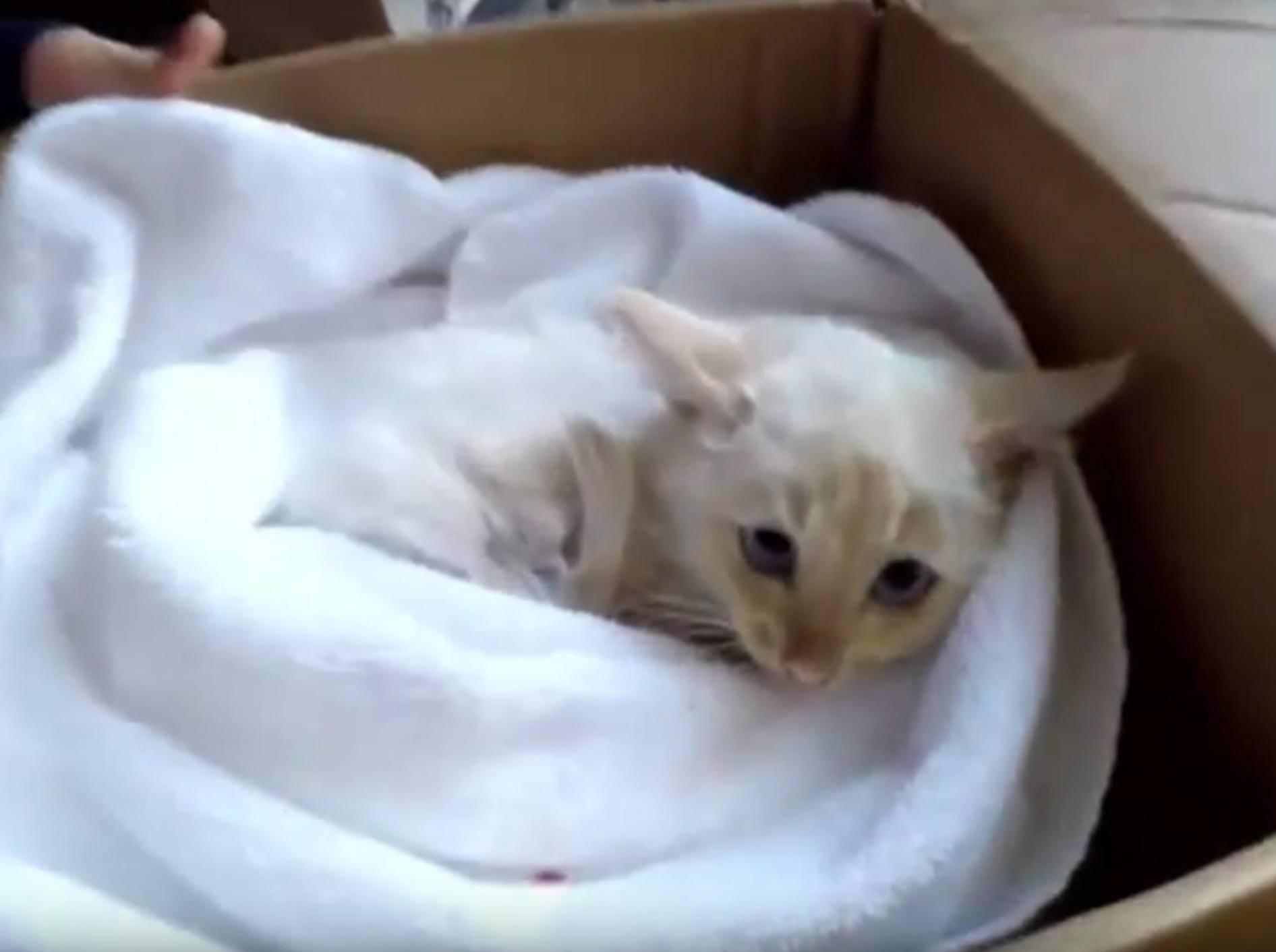 Kätzchen Lazarus wurde in letzter Sekunde vorm Erfrieren gerettet – YouTube / Inside Edition via Brandon Bingham