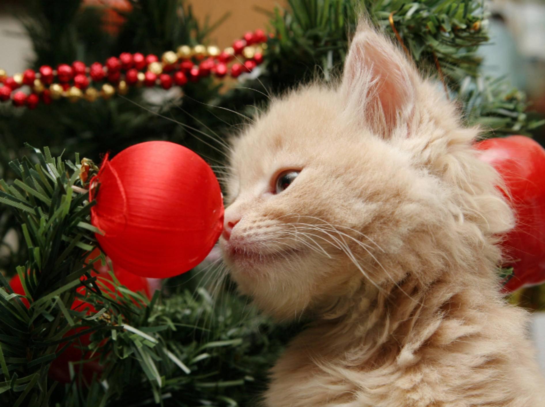 Weihnachtsdeko sollte unbedingt bruchsicher und ungefährlich sein – Shutterstock / Sue McDonald
