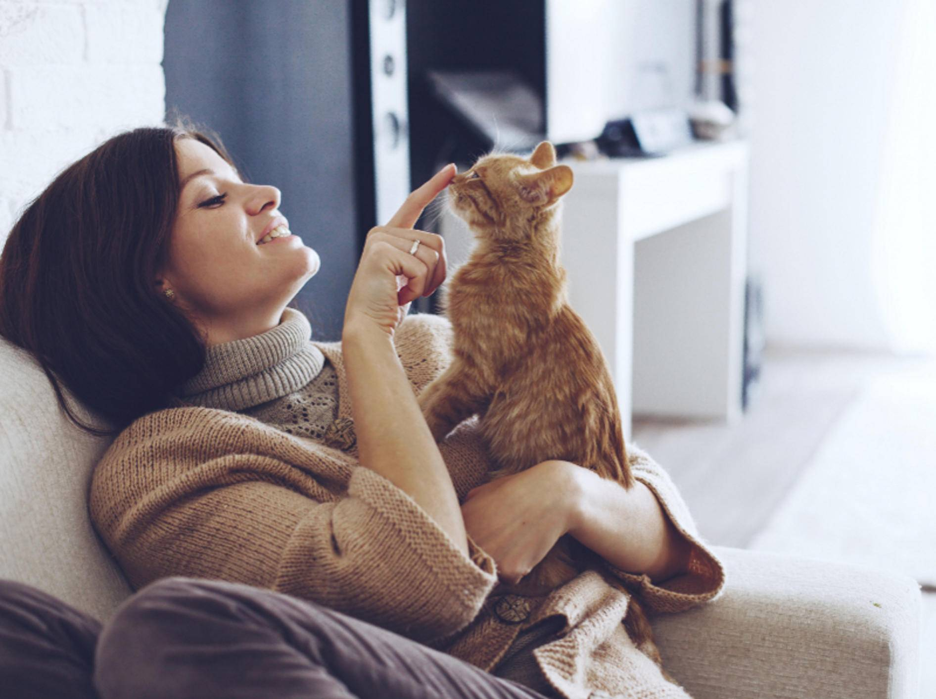 Geduld und Liebe stärkt das Vertrauen zwischen Ihnen und Ihrer Katze – Shutterstock / Alena Ozerova