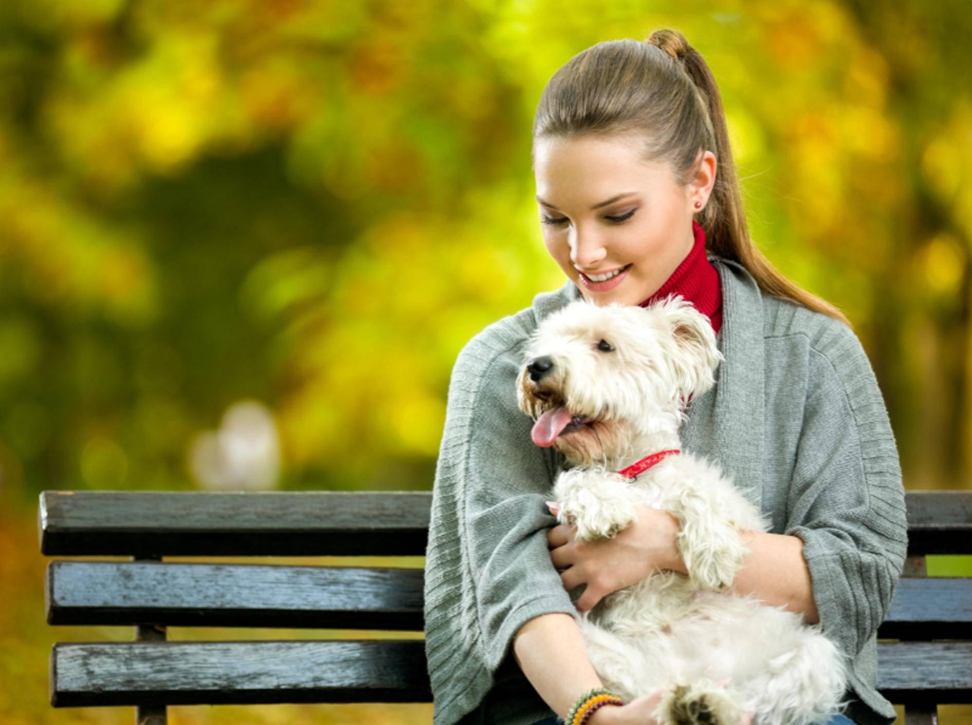 Malteser sind sehr menschenbezogene und liebenswerte Hunde – Shutterstock / Lucky Business