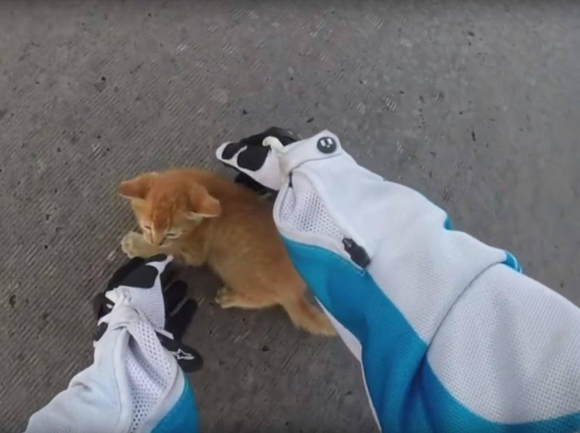Kätzchen wird von Motorradfahrerin gerettet – YouTube / E511