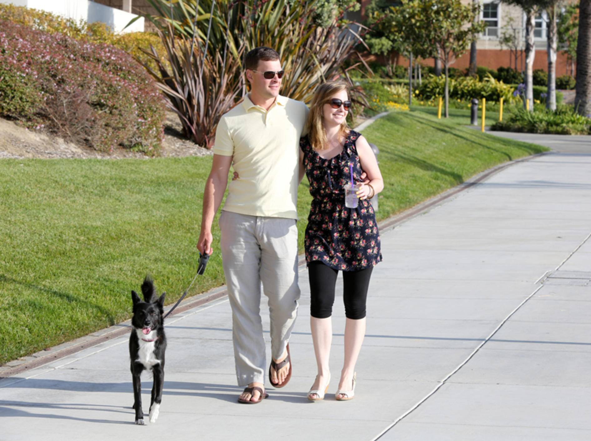 Vor allem in Straßennähe sollten Sie Ihren Hund anleinen – Shutterstock / Phase4Studios