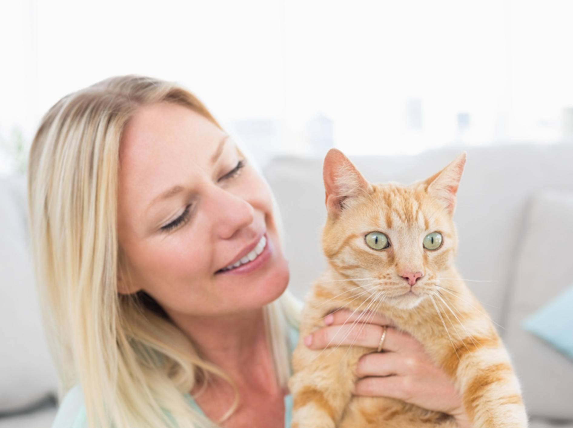 """""""Streicheln? Bloß nicht!"""", denkt die rot getigerte Katze – Shutterstock / wavebreakmedia"""