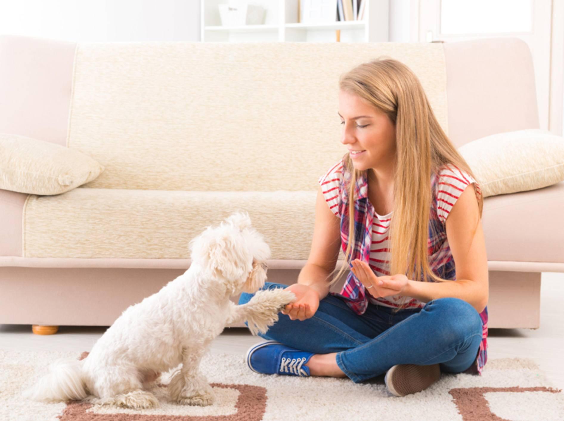 Das tägliche Hundetraining sollte Ihnen und Ihrem Hund Spaß machen – Shutterstock /Monika Wisniewska
