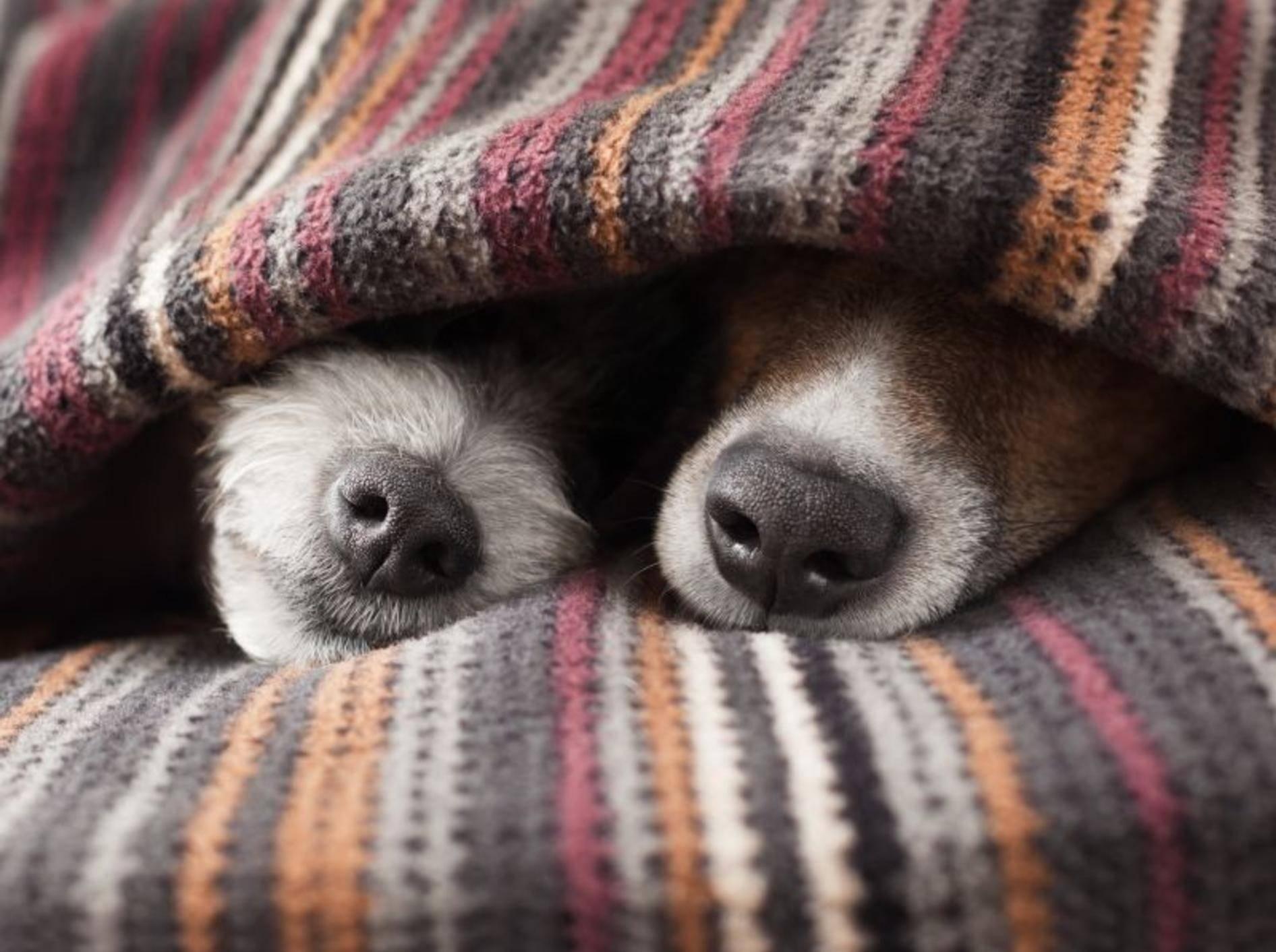 Wärme und Ruhe sind wichtig bei einer Erkältung – Shutterstock / Javier Brosch