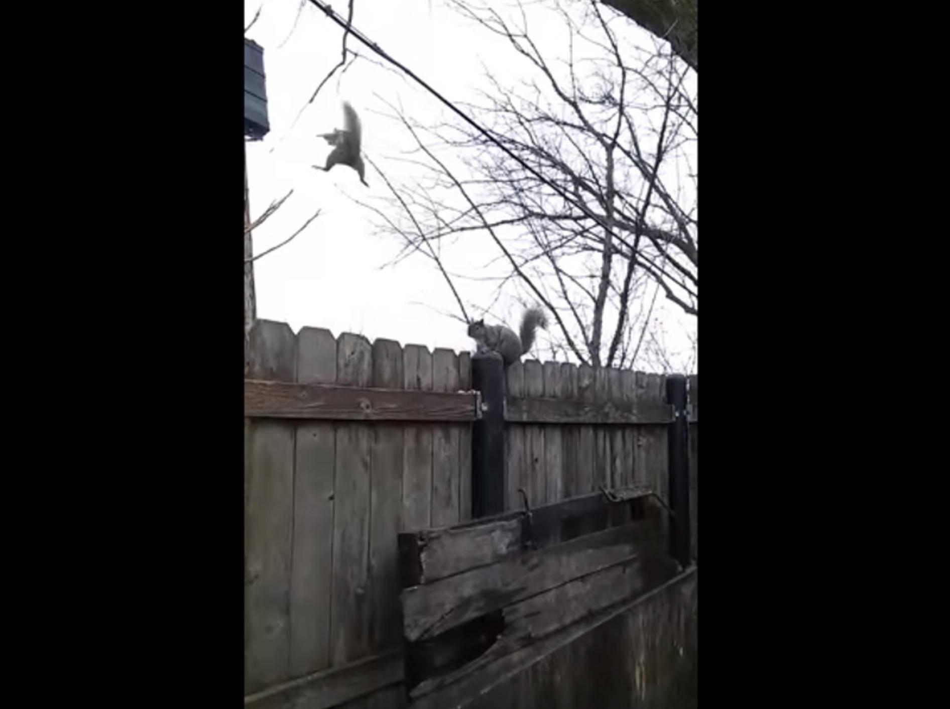 Upsi! Eichhörnchen verschätzt sich – Bild: YouTube / Mr Walrus