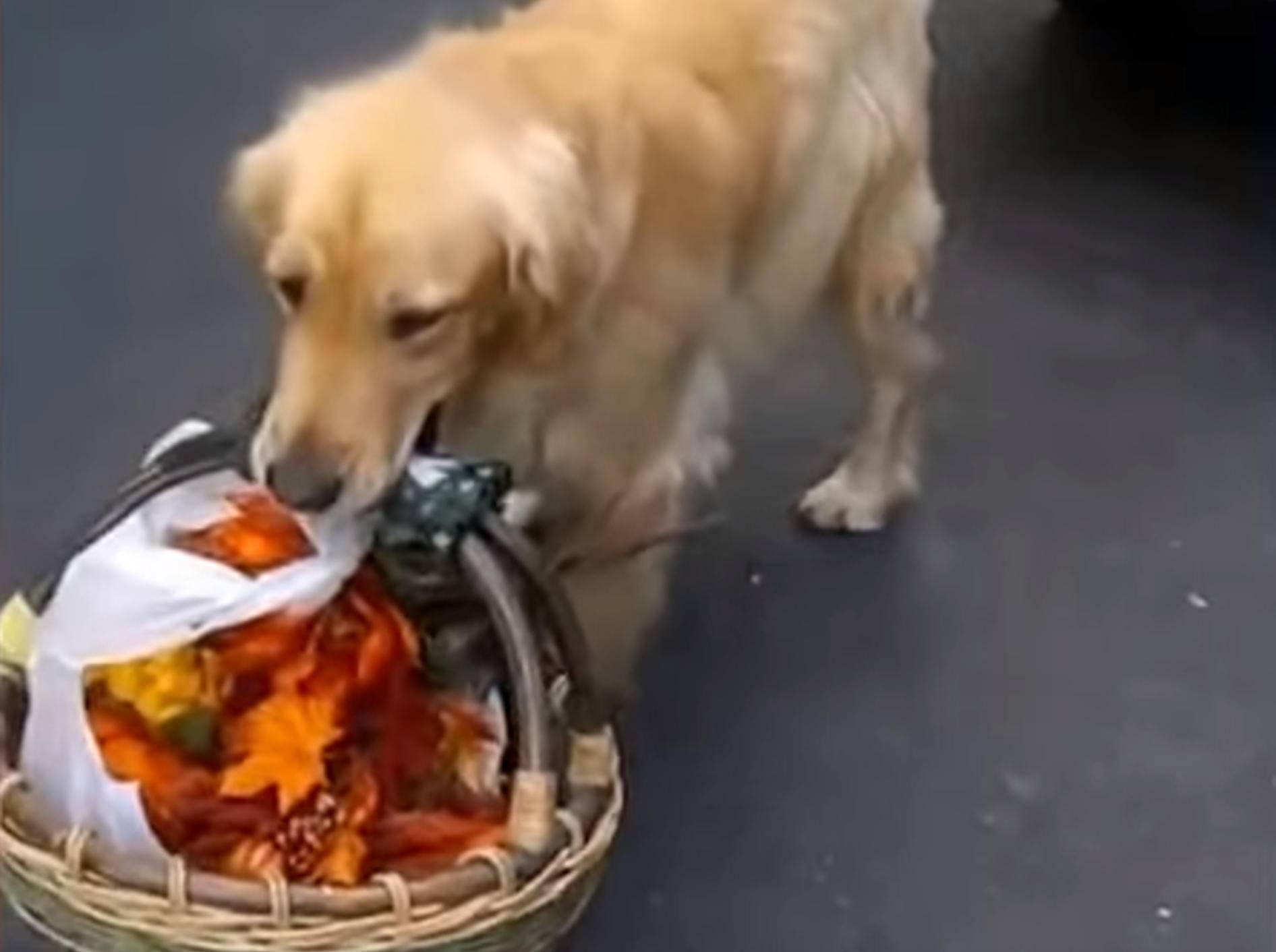 """""""Darf ich behilflich sein?"""" Hunde helfen im Haushalt – Bild: YouTube / The Dodo"""