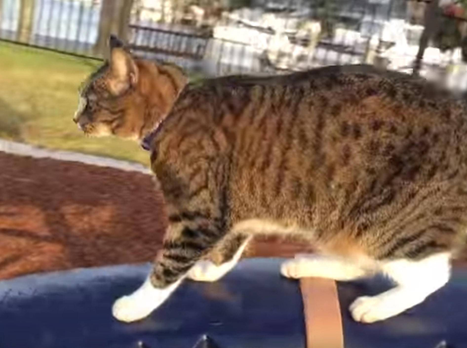 Schwindelfrei: Katze Digda fährt Karussell – Bild: YouTube / CATMANTOO