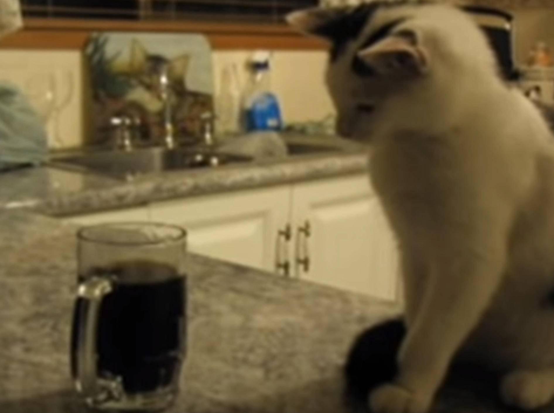 Uuuups! Katze schmeißt Glas um – Bild: YouTube / Kyoot Animals