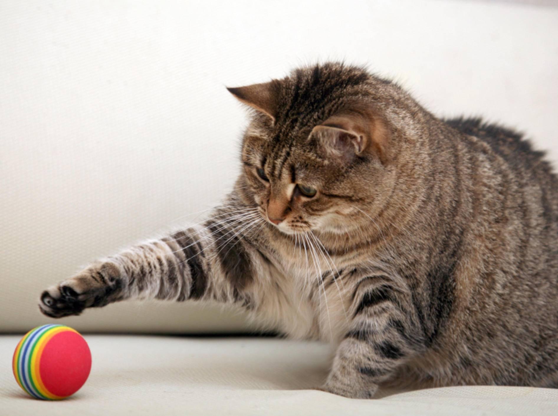 Katzenspielzeug sollte sicher sein, damit risikofreier Spaß garantiert ist – Shutterstock / Onishchenko Natalya
