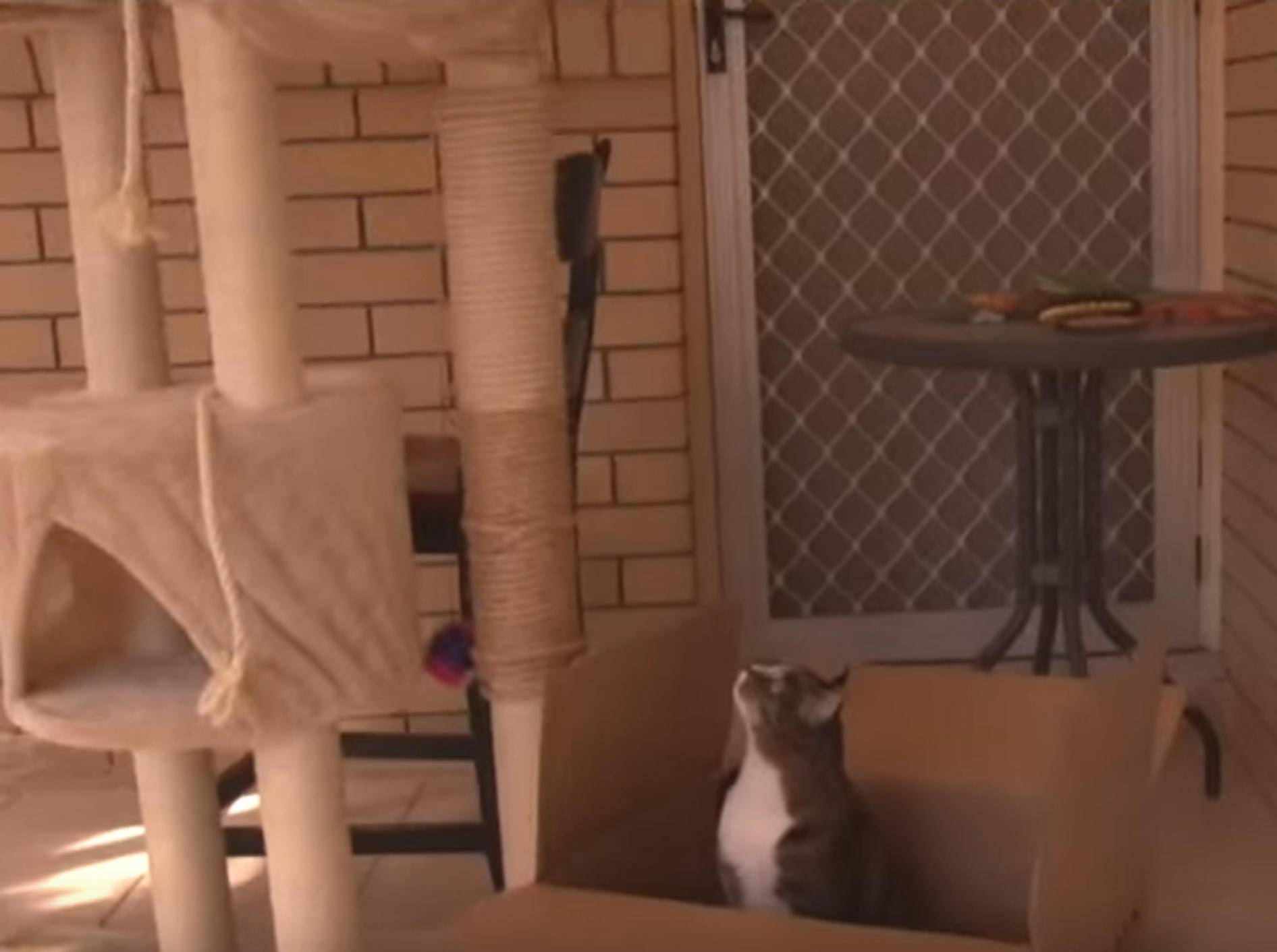 """""""Neuer Kratzbaum? Pffft"""": Katzen finden Verpackung spannender – Bild: YouTube / CATMANTOO"""