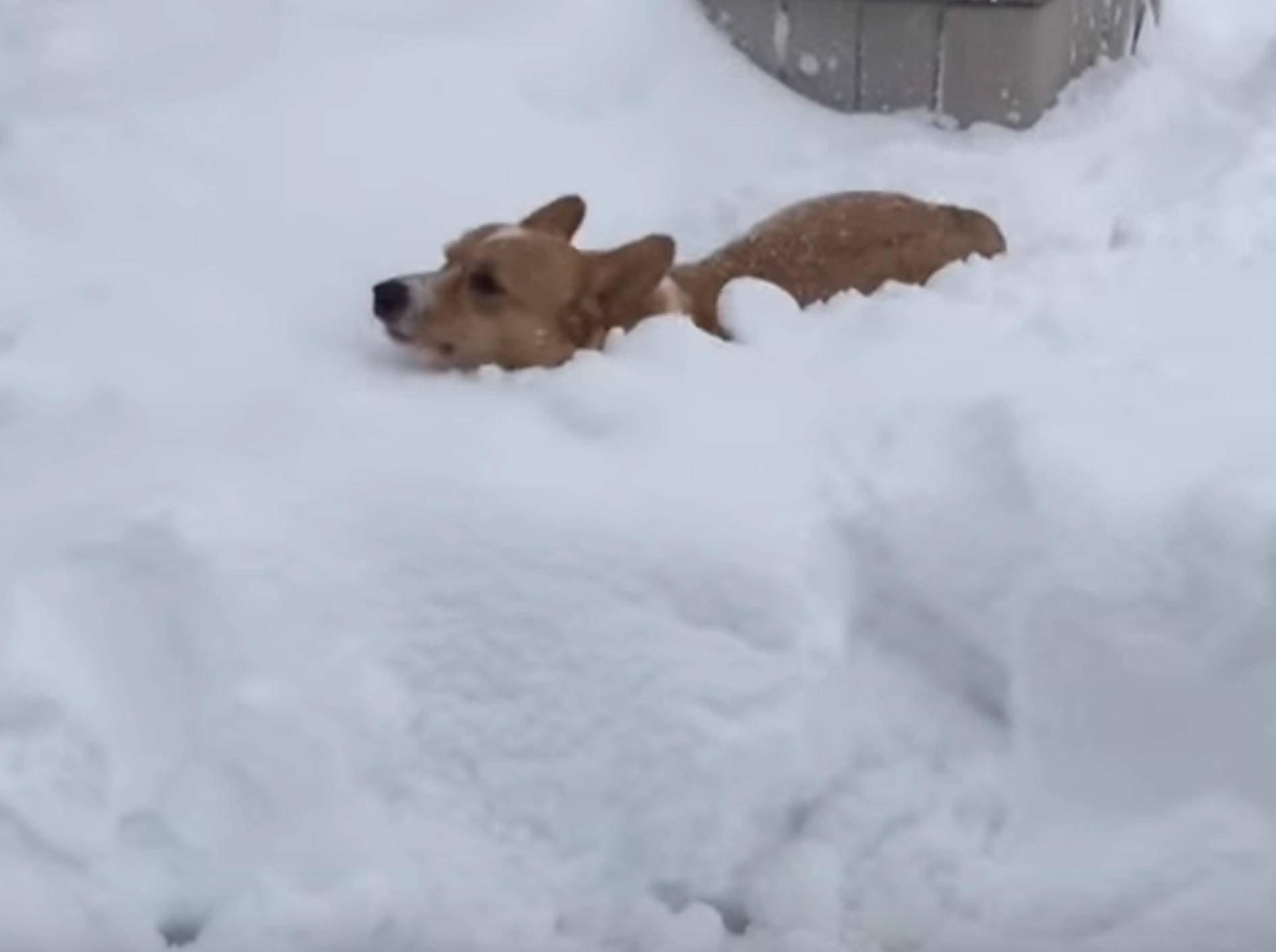 Soooo viel Schnee! Tiere haben Spaß in der Winterzeit – Bild: YouTube / The Dodo