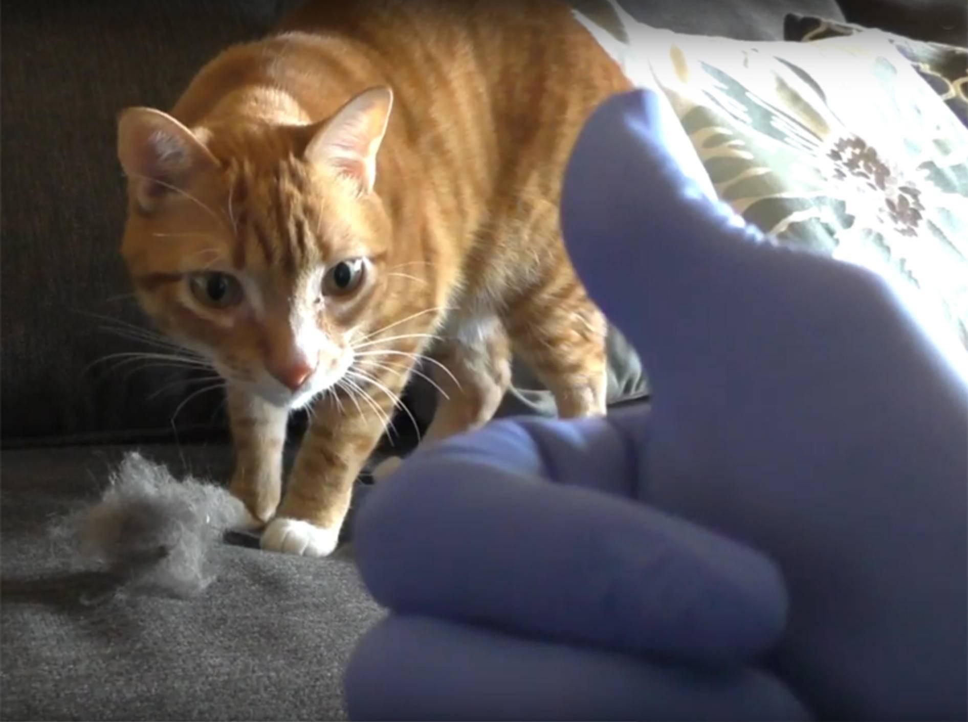 Cole und Marmalade geben praktische Tipps für Katzenhalter – YouTube / Cole and Marmalade