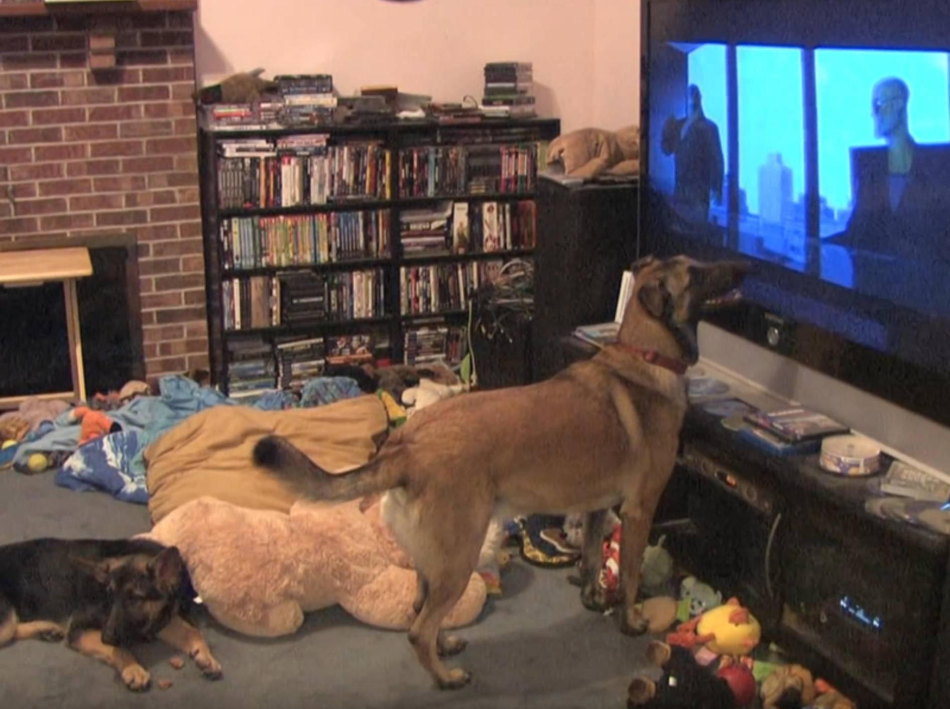 """""""Oh, das ist mein Lieblingsfilm!"""": Hund flippt total aus – YouTube / K9Stryker"""