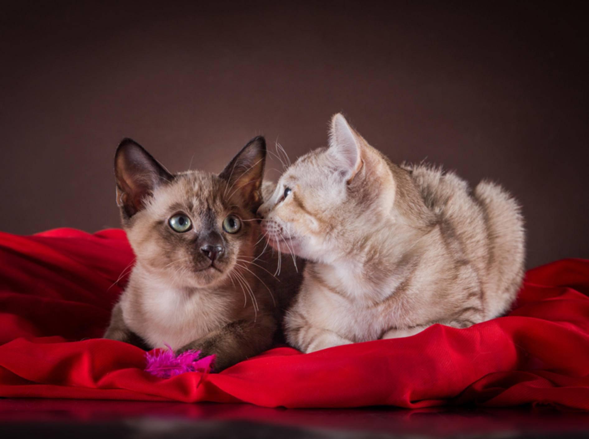 """""""Psst, hast du an den Kaufvertrag für uns gedacht?"""", flüstert das Kätzchen seinem Kumpel ins Ohr – Shutterstock / dezi"""