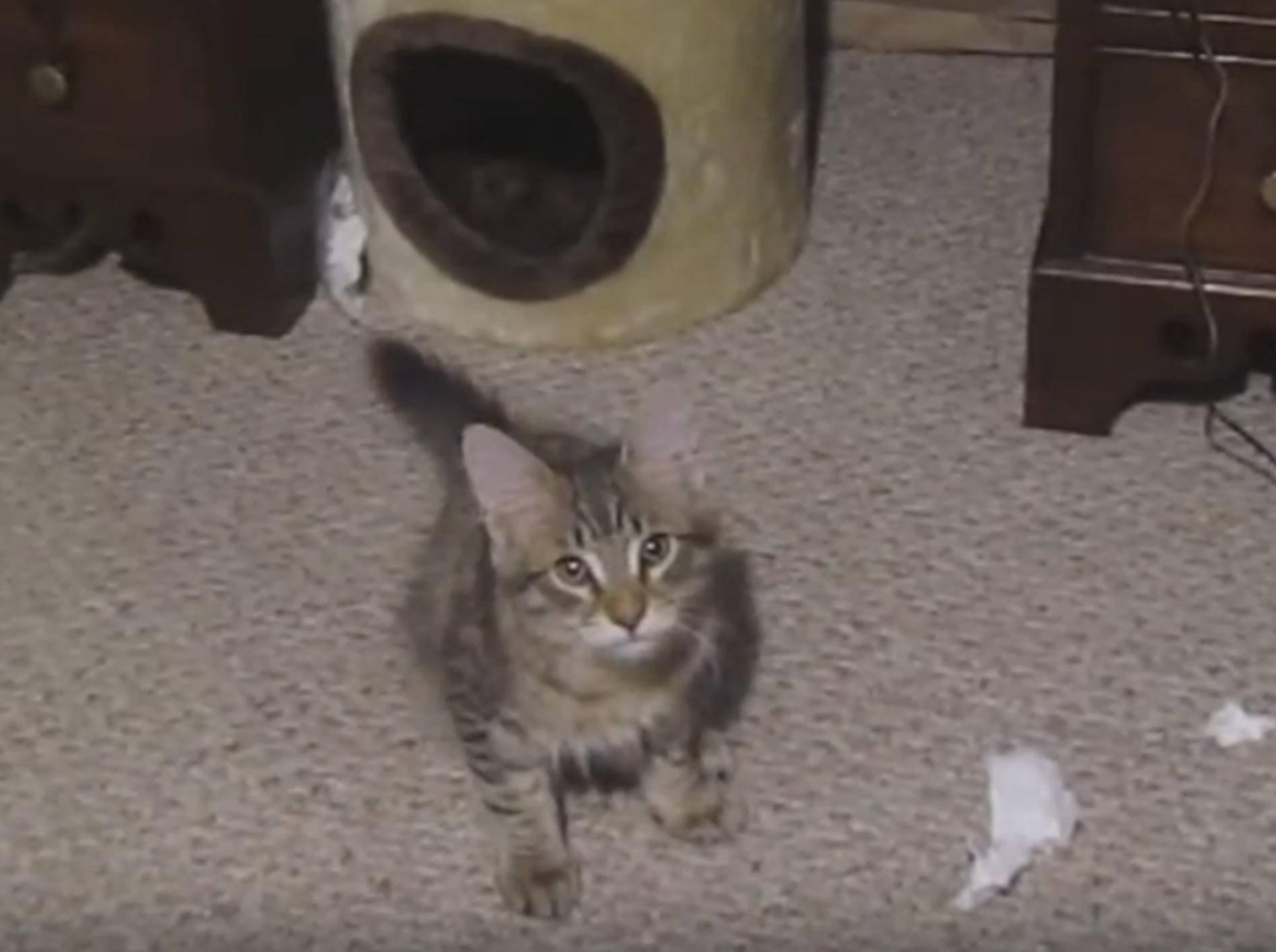 Kleines Kätzchen will nicht aufräumen – YouTube / FrozenVegie