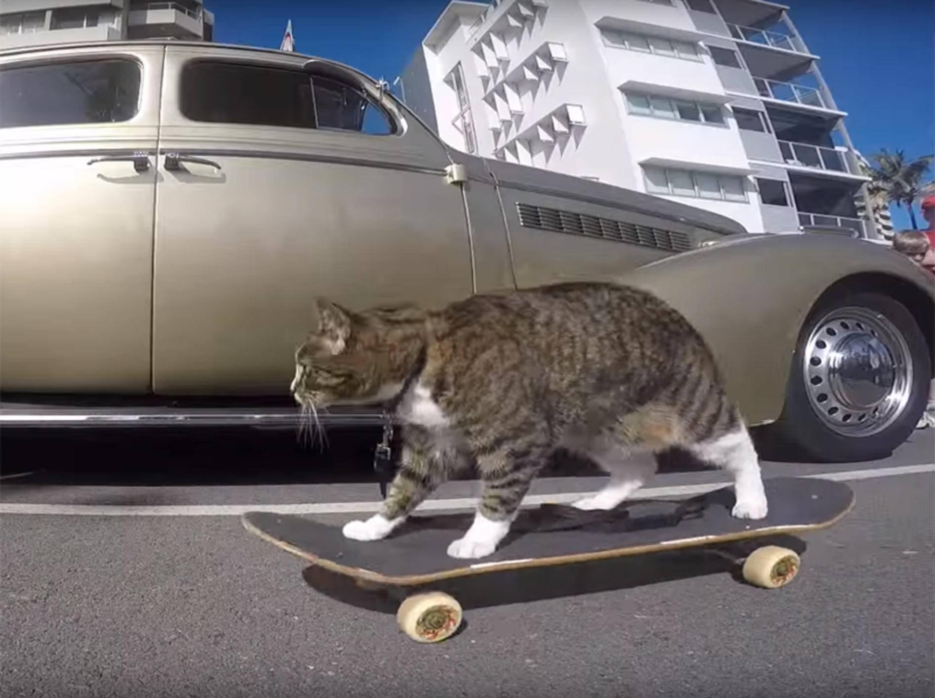 Katze Didga fährt gern Skateboard – YouTube / CATMANTOO