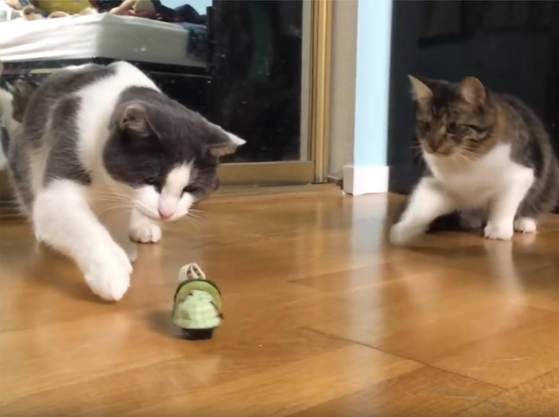 Husky Lilo und ihre Katzenfreunde erkunden neues Spielzeug –YouTube / lilothehusky