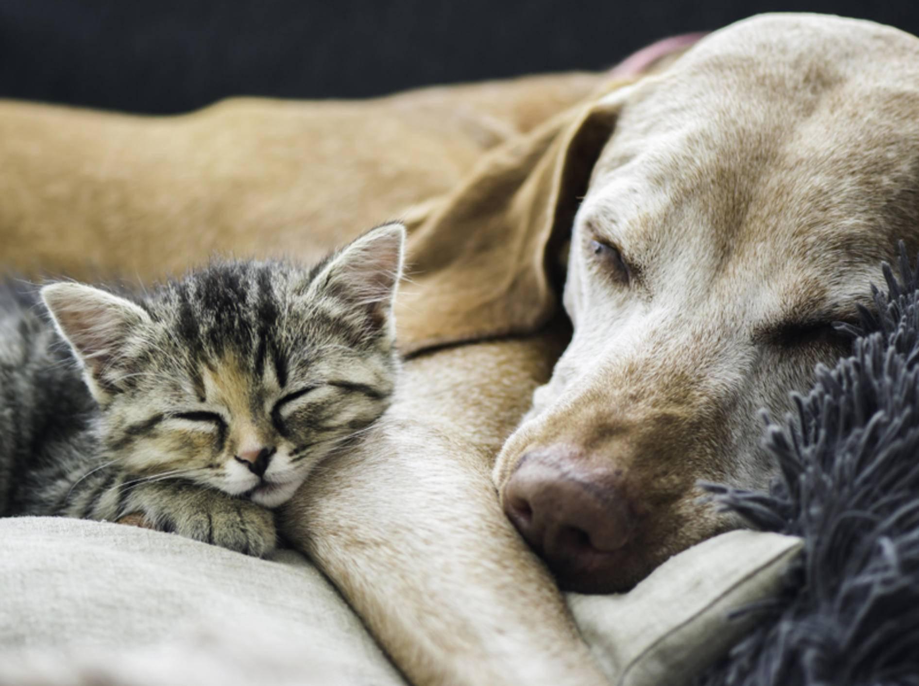 Diese beiden Süßen träumen bestimmt von ihrer tollen Freundschaft – Shutterstock / Vasek Rak