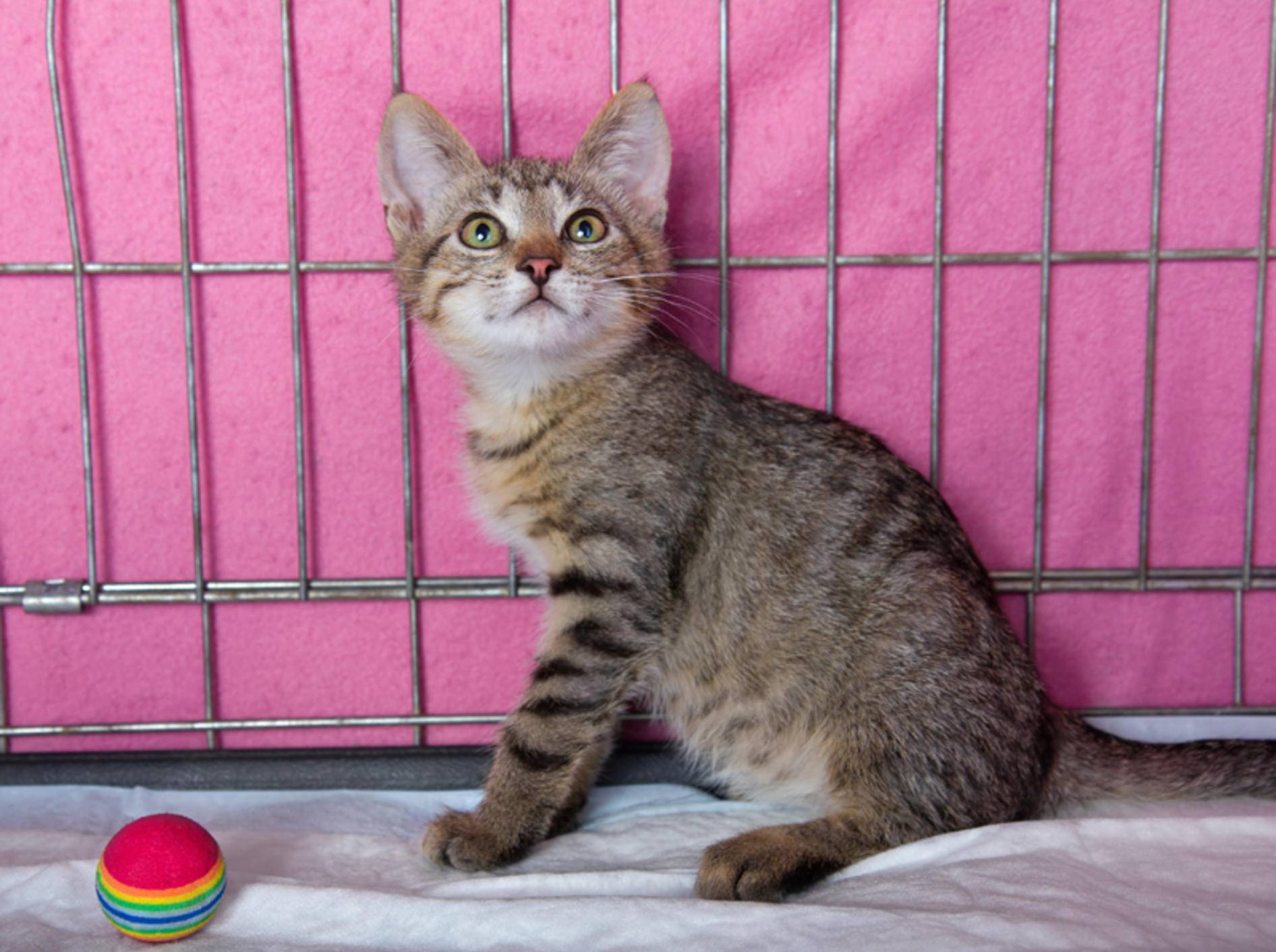 """""""Wer will mich haben?"""", fragt sich die süße Katze aus dem Tierheim – Shutterstock / Eillen"""